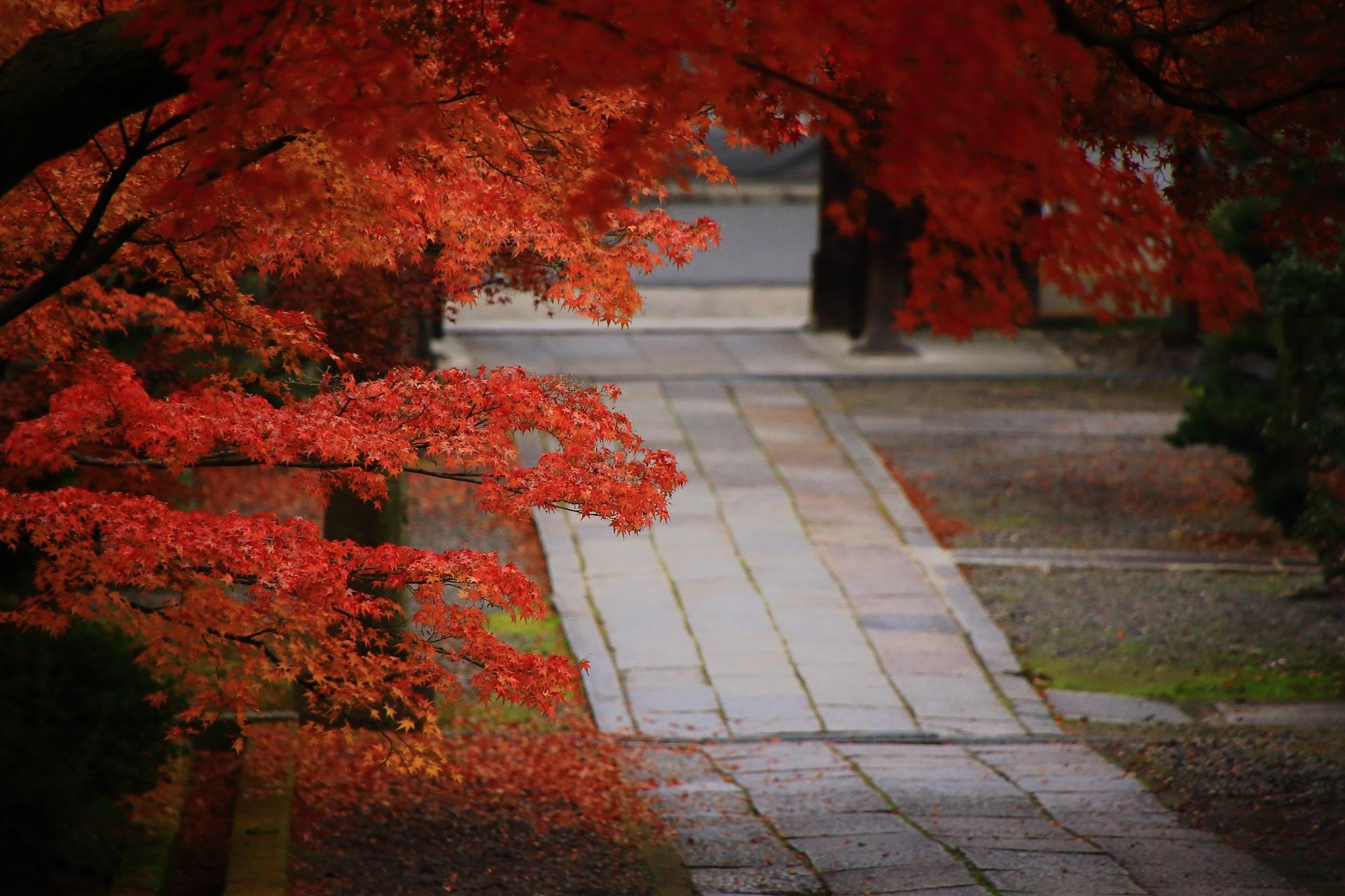 秋風に揺れる情緒ある紅葉と風情ある石畳の参道