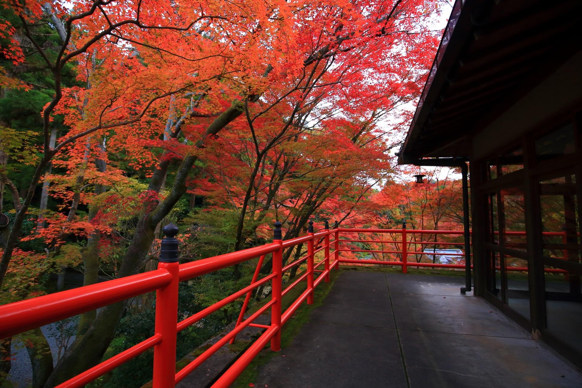 無料でゆっくり静かに紅葉狩りができる今熊野観音寺