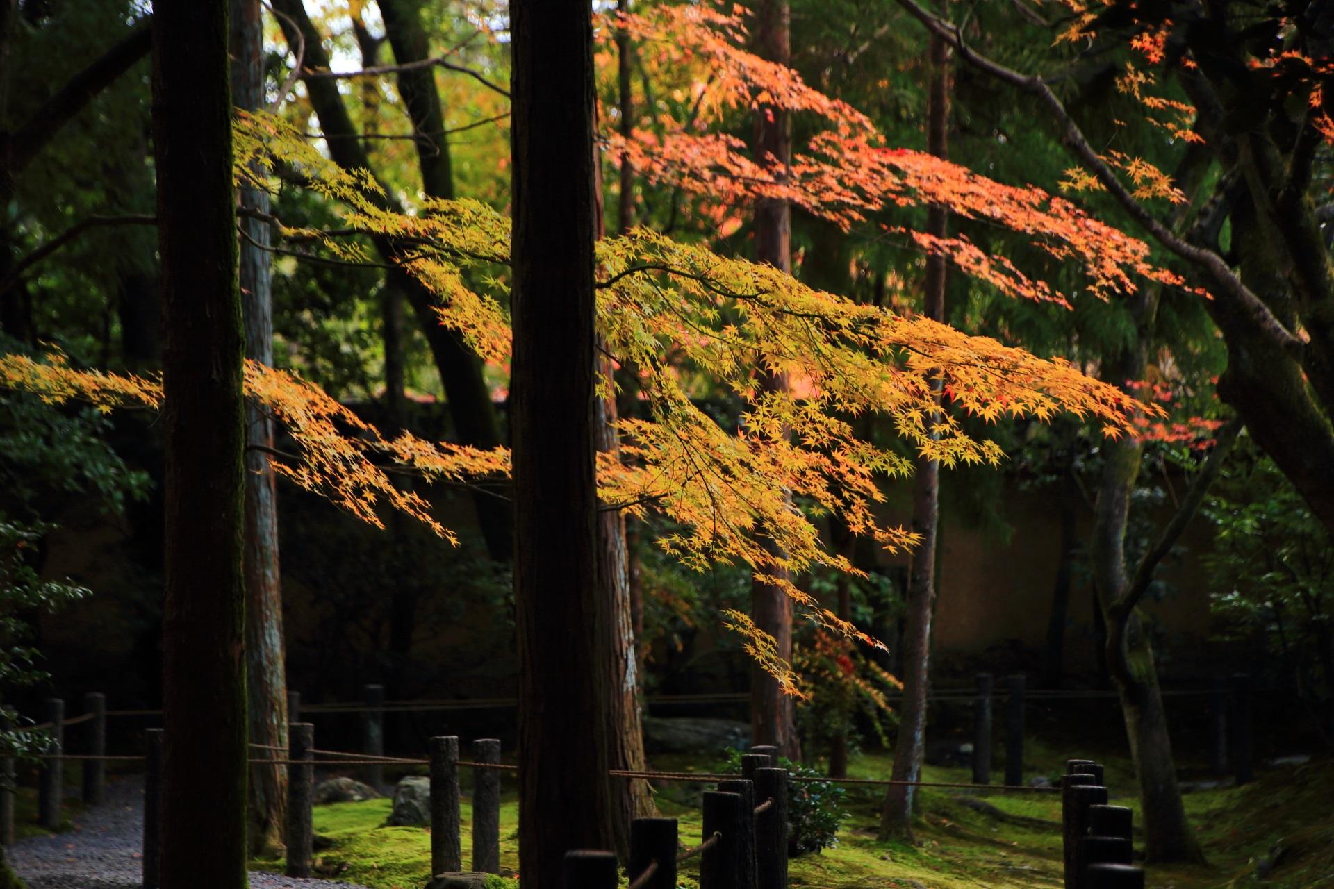 桂春院の木々の間で揺らめく華やかな秋色