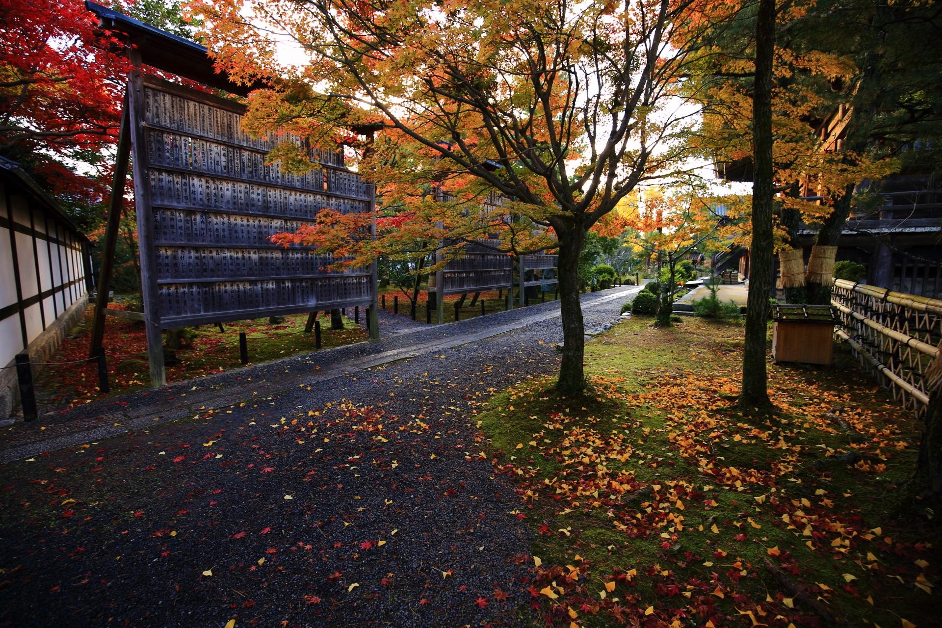 参道や苔に散る黄色い銀杏の風情ある情景