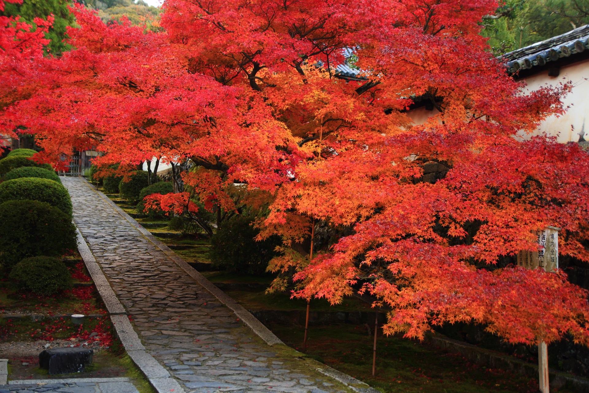 濃く色づく一休寺の参道の紅葉