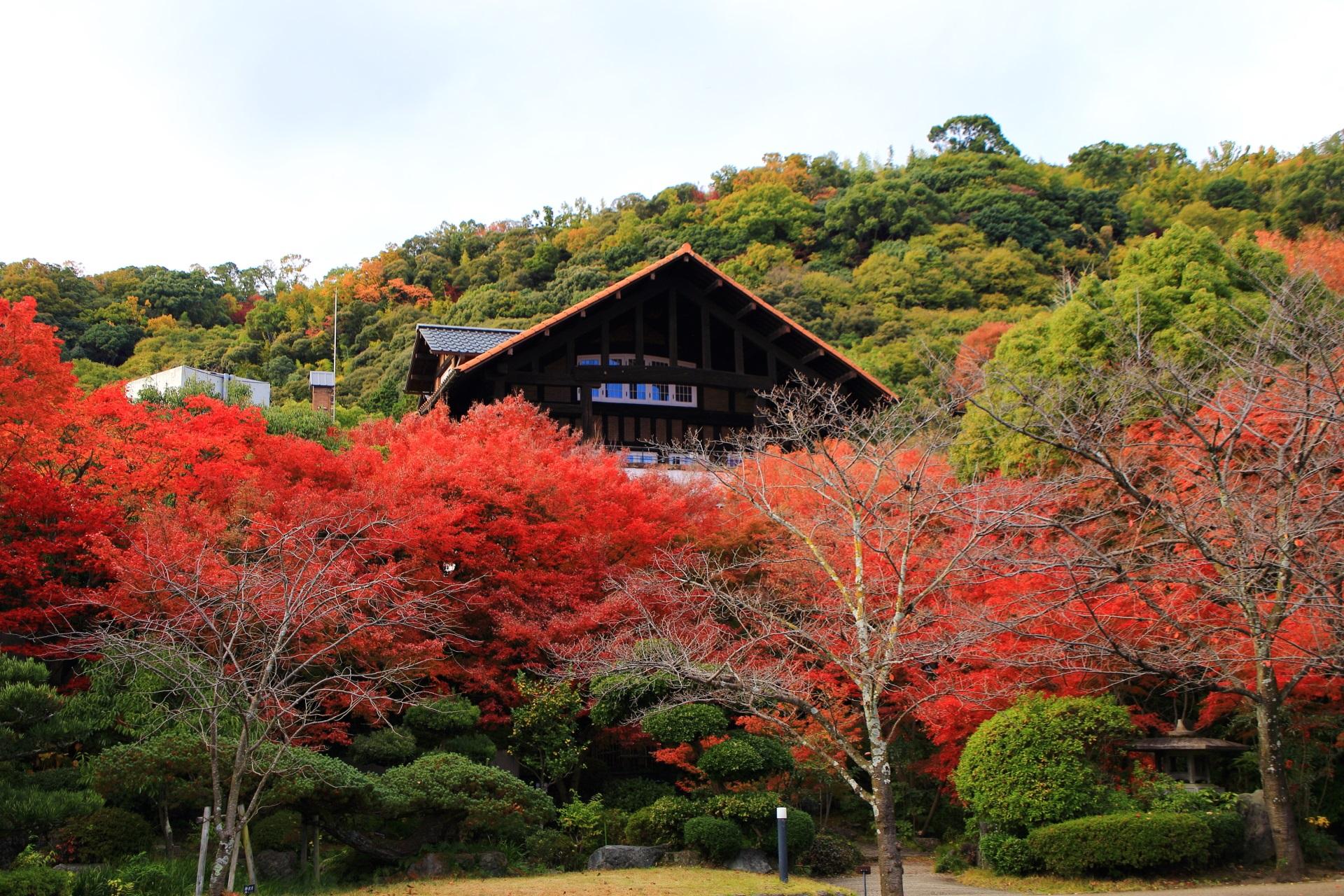 庭園から眺めた美術館本館と燃え上がるような紅葉