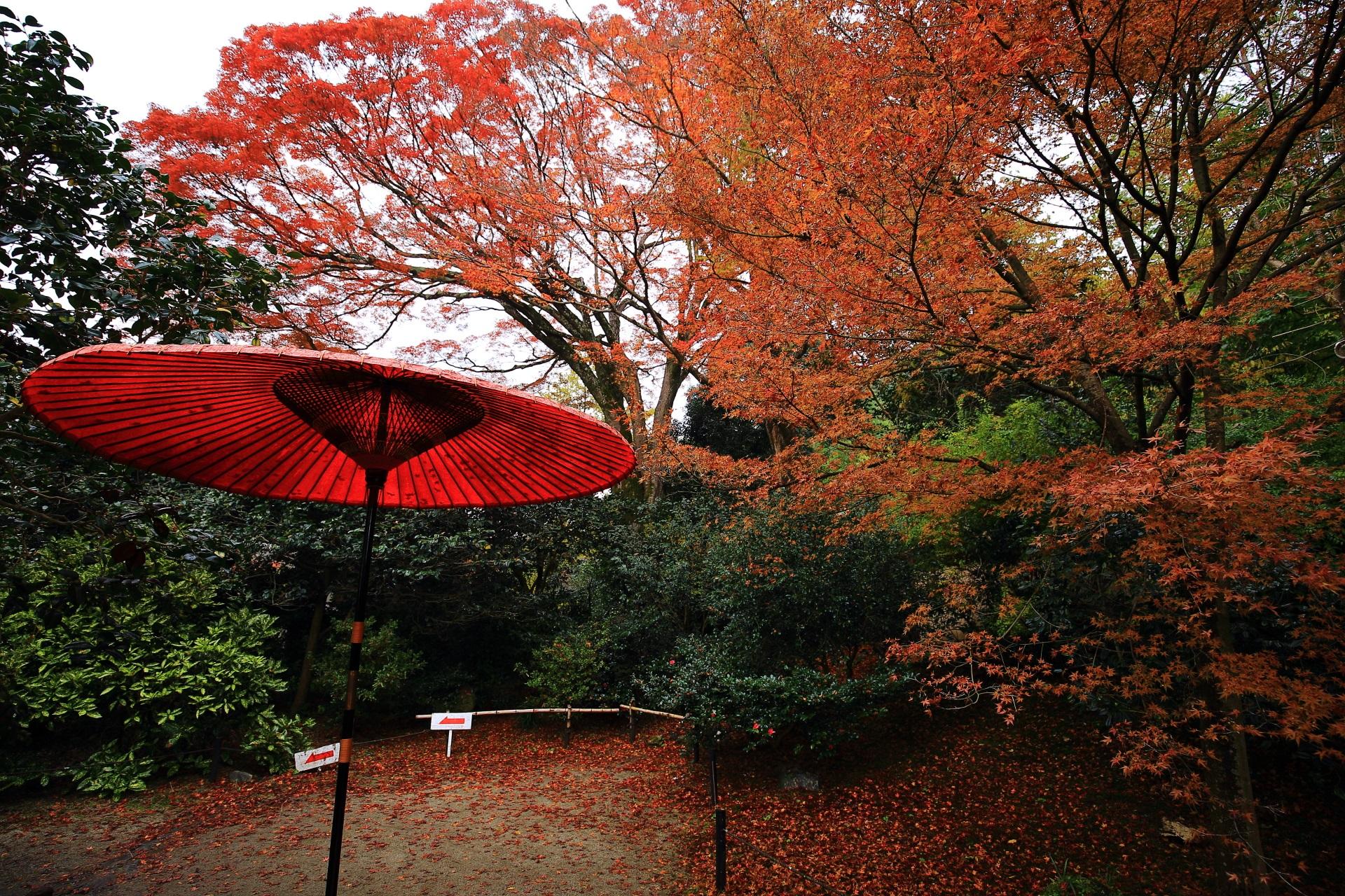 「霊鑑寺楓」と呼ばれる樹齢400年とされる大楓