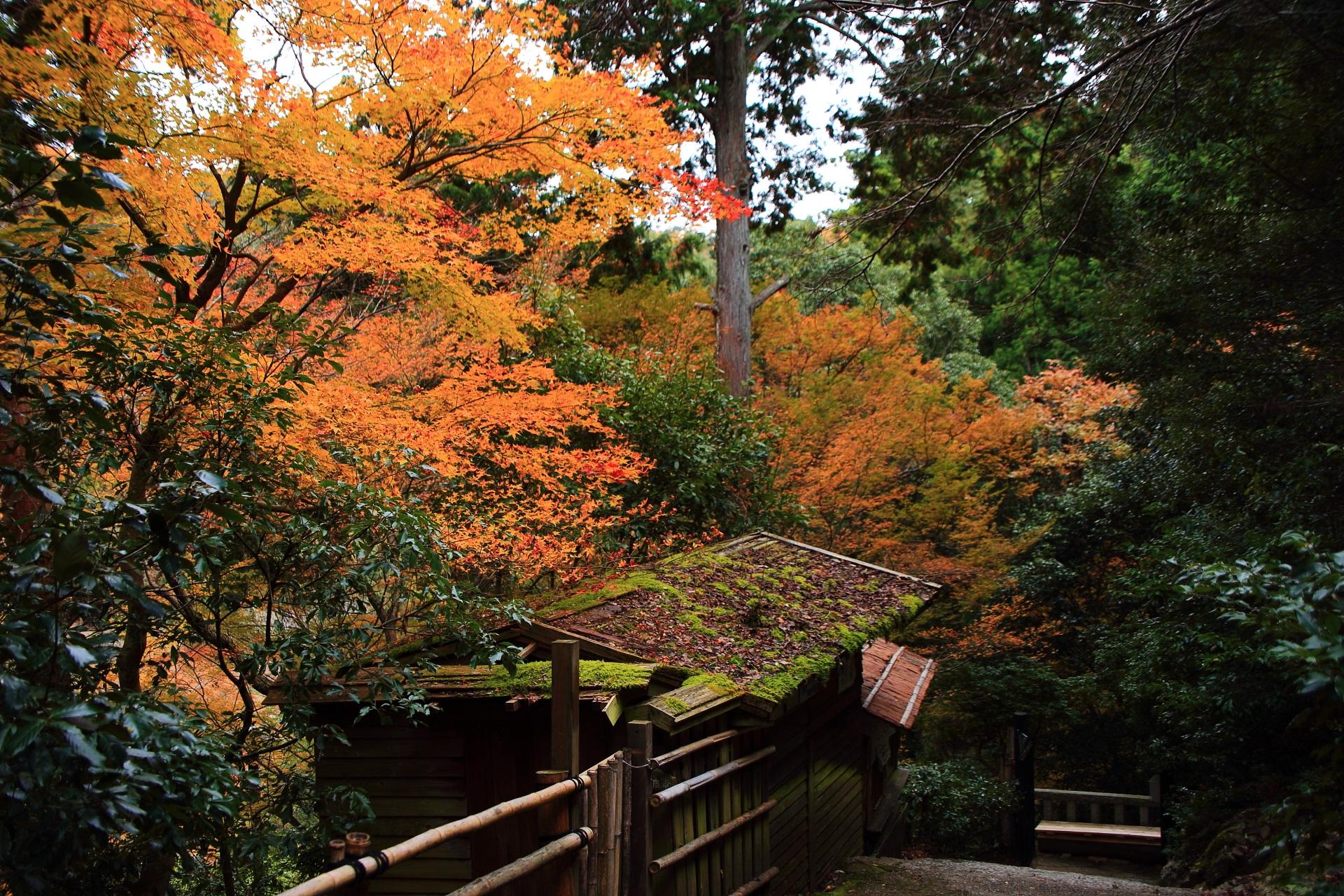 嵐山の風情ある参道を彩る紅葉