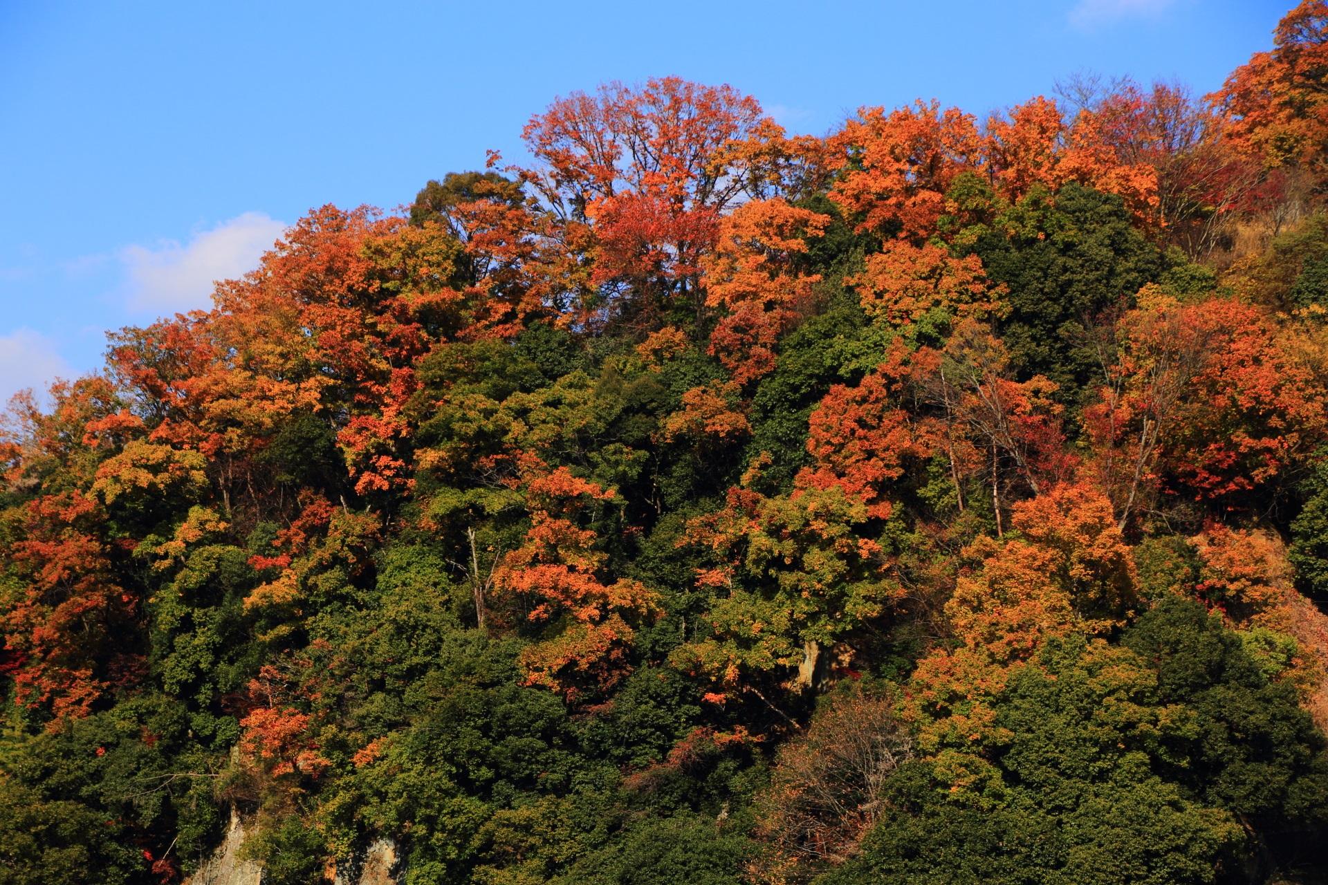 太陽を浴びて煌く鮮やかな山の紅葉