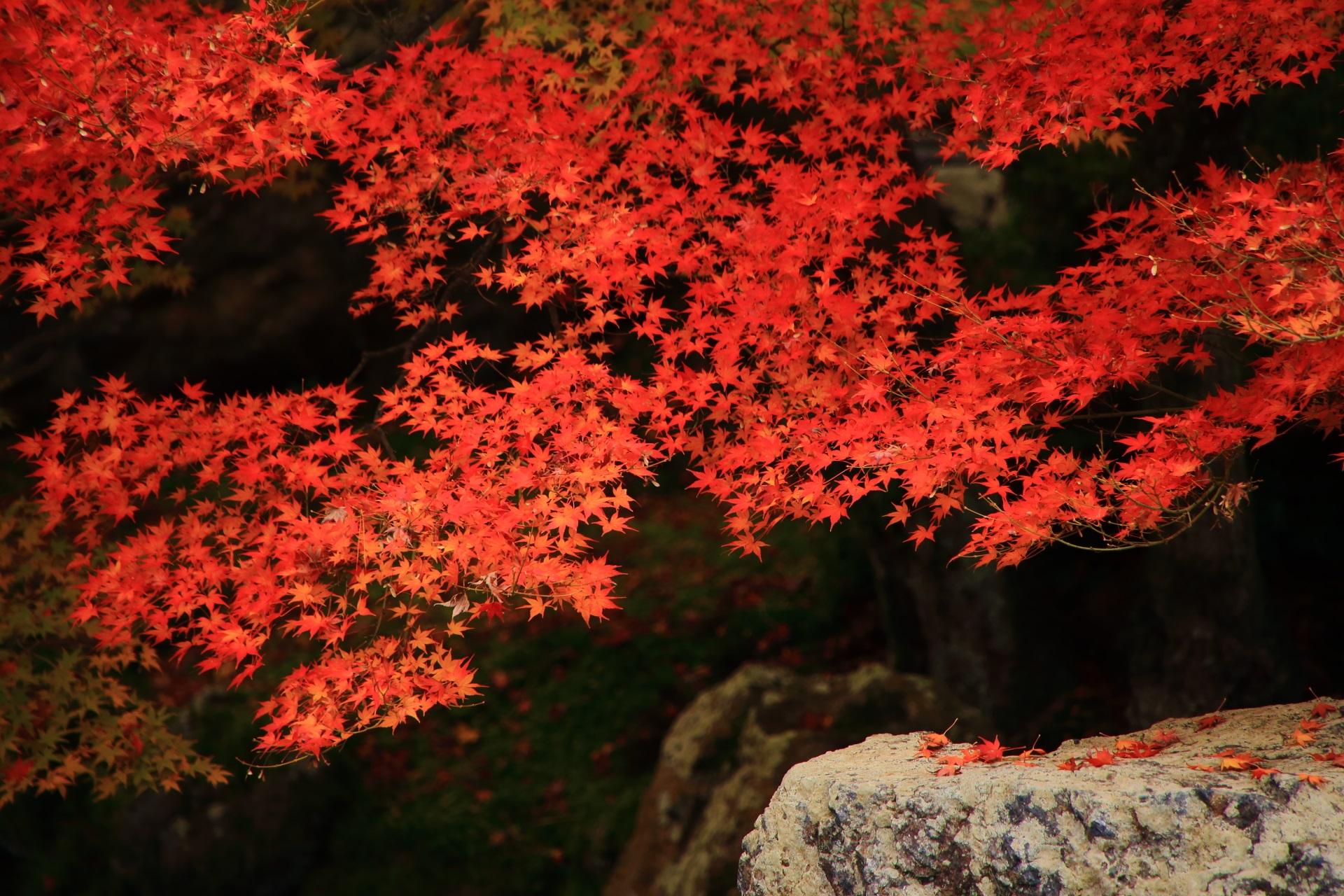 浮かび上がる色鮮やかな紅葉