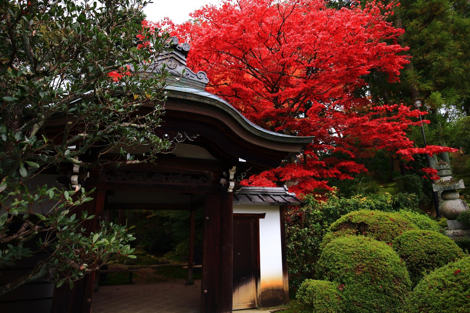 庭園へ誘う燃え上がるような真っ赤な紅葉