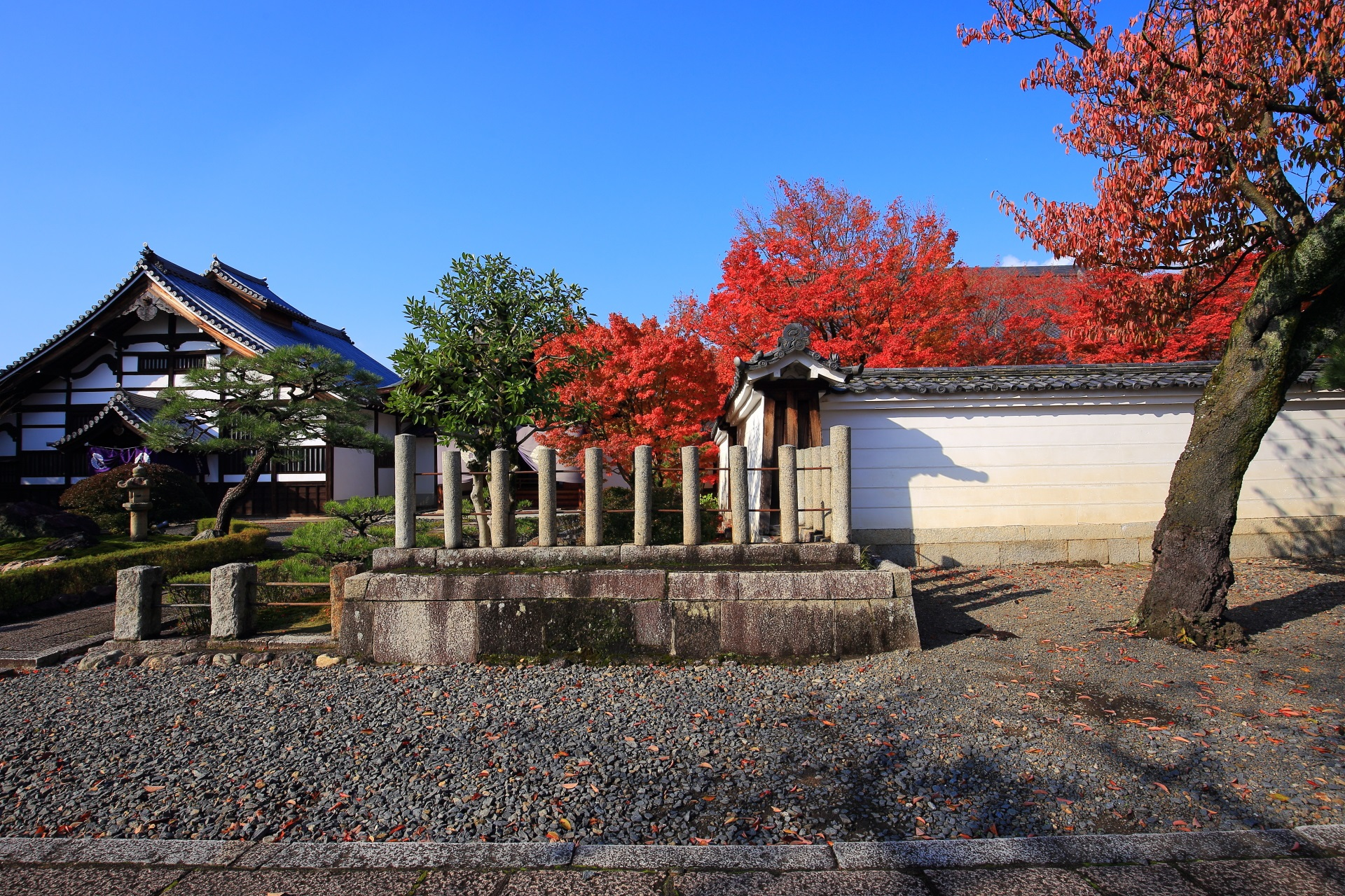 妙覚寺の青空の下の庫裡と溢れ出す真っ赤な紅葉
