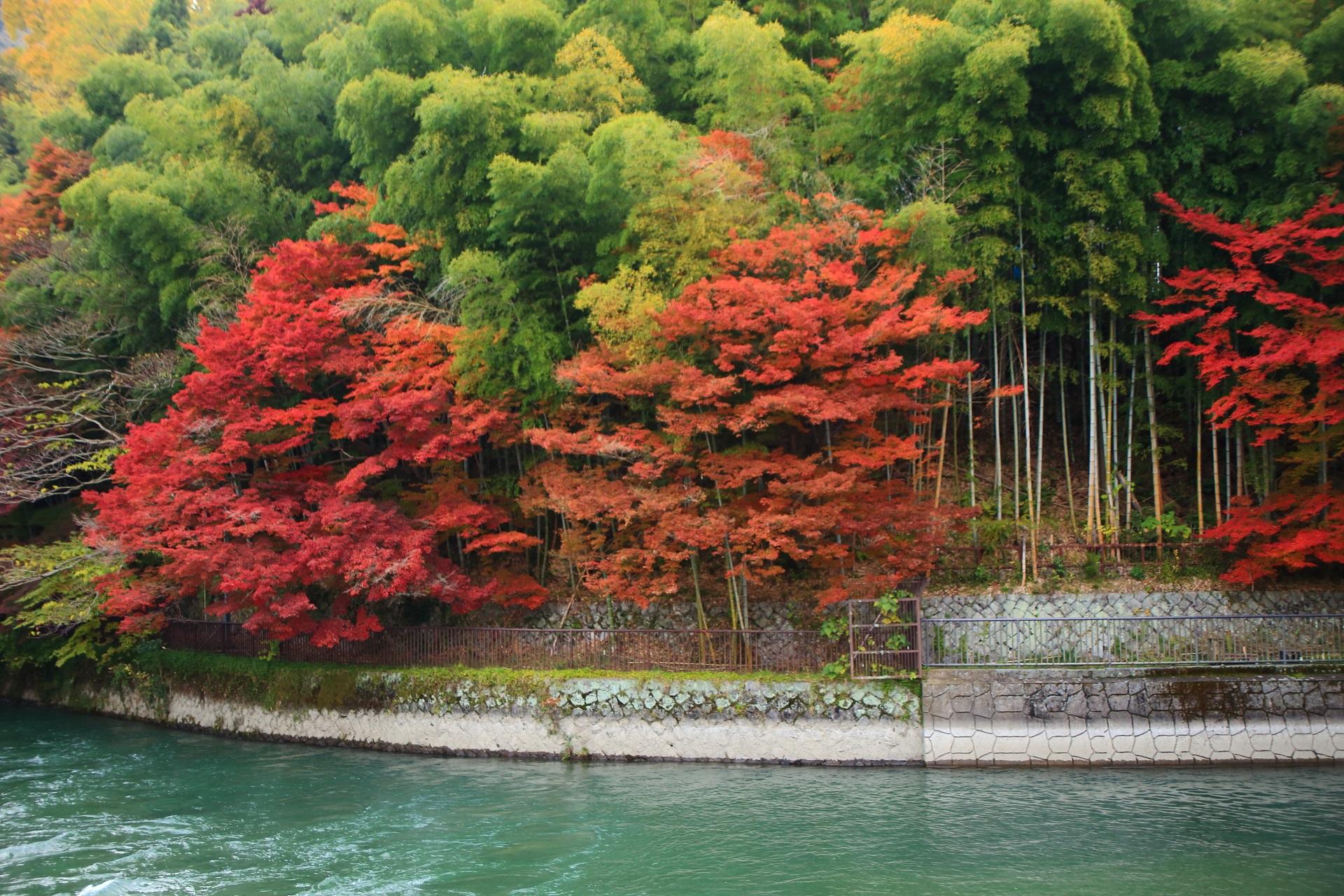 宇治川の竹とコラボした色とりどりの艶やかな紅葉