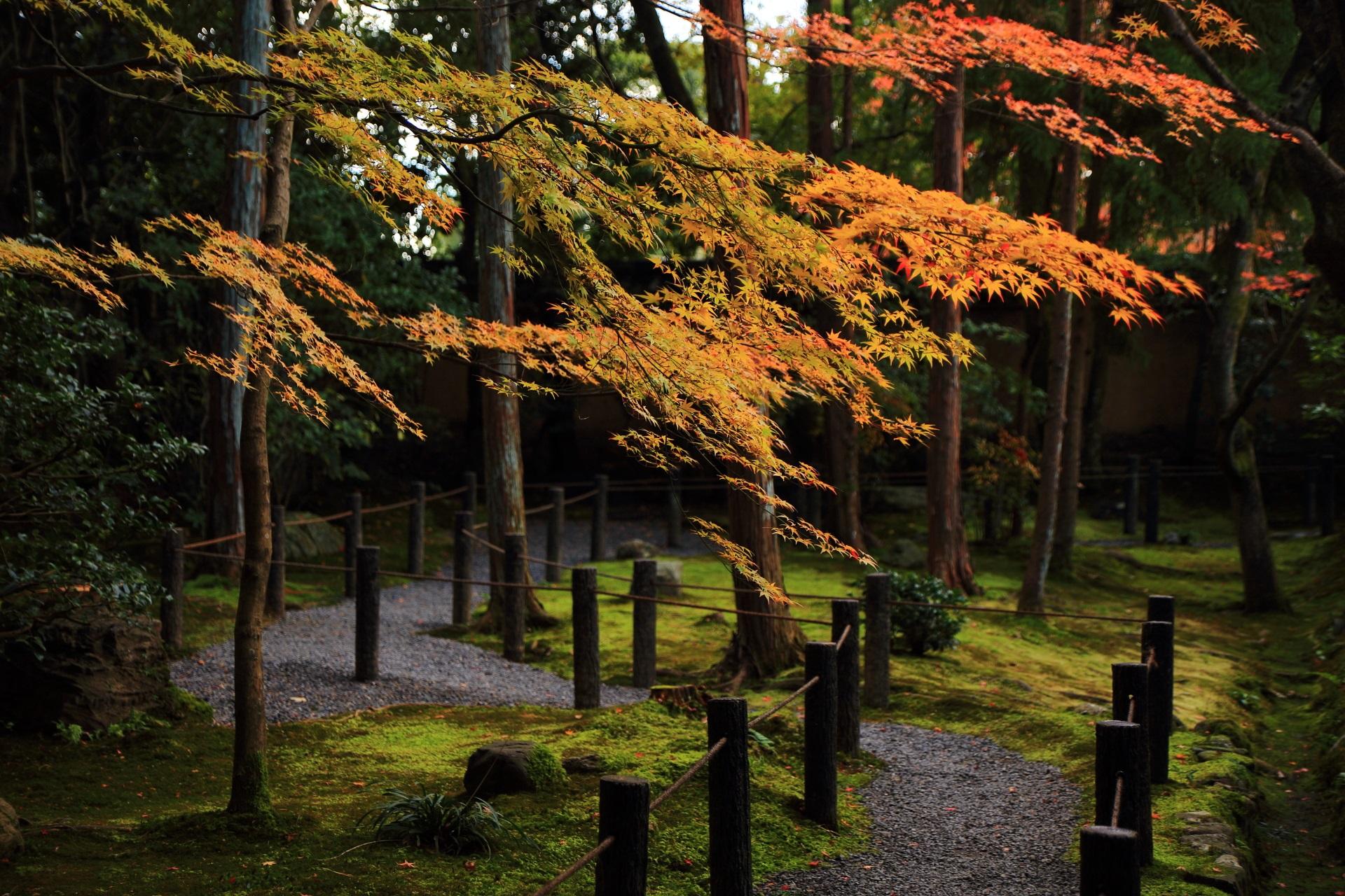 桂春院の参道の奥側(反対側)から眺めた煌びやかな紅葉
