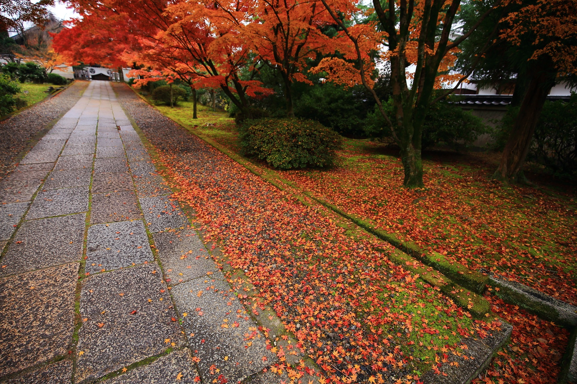 高画質 写真 散り紅葉 養源院