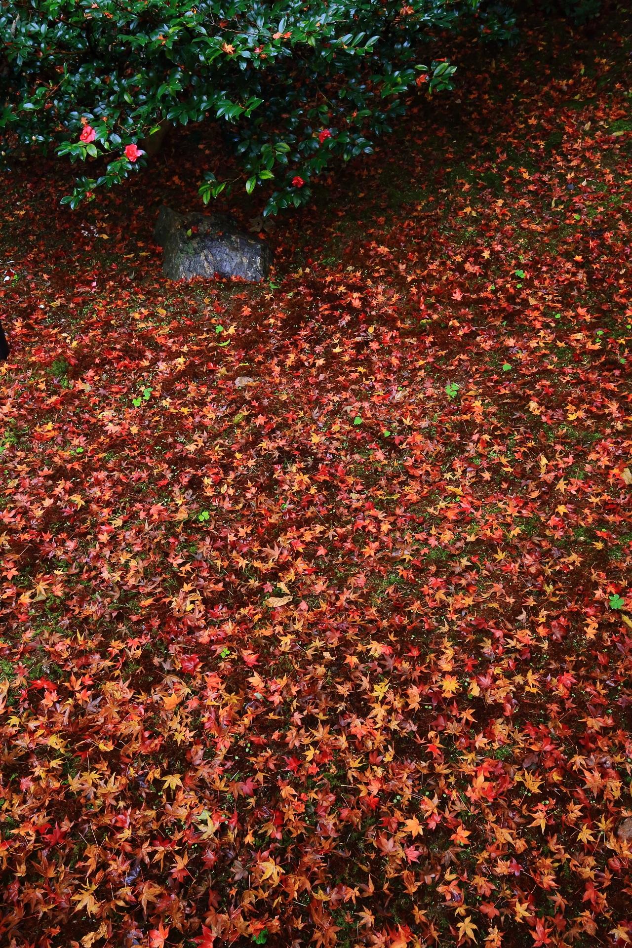霊鑑寺の圧巻の敷紅葉