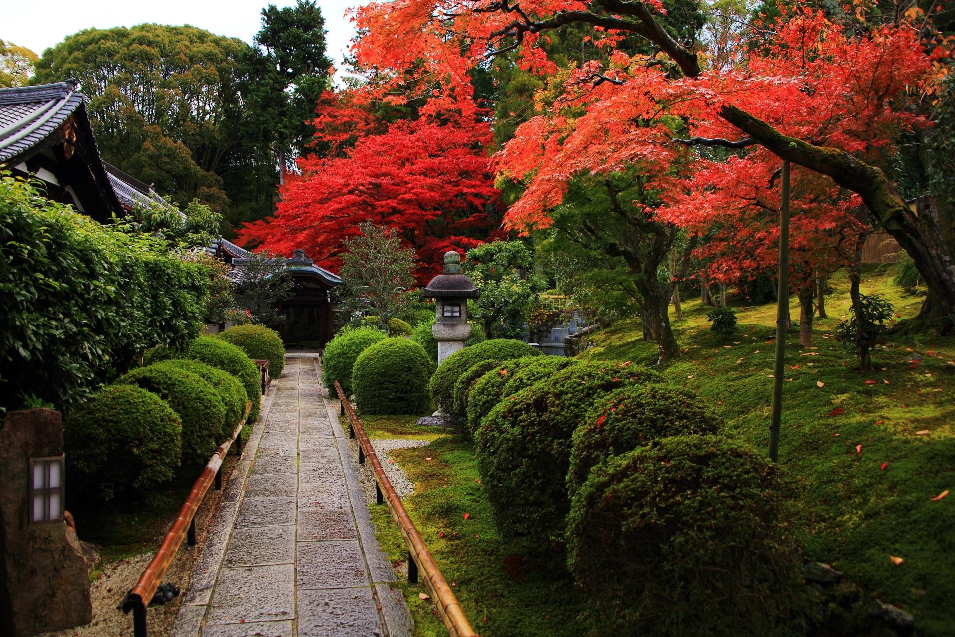緑の苔や刈り込みや生垣の上を彩る赤やオレンジの鮮やかな紅葉