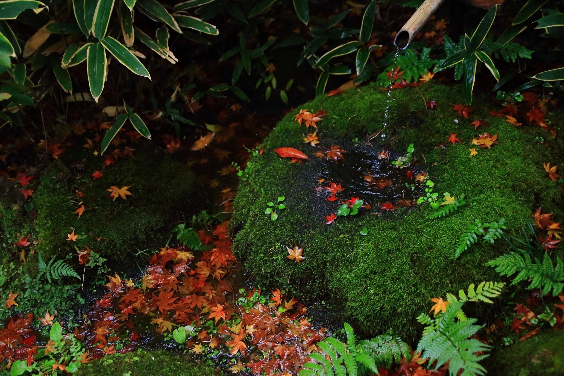 含翠庭の苔に覆われた緑の蹲と華やかな散りもみじ