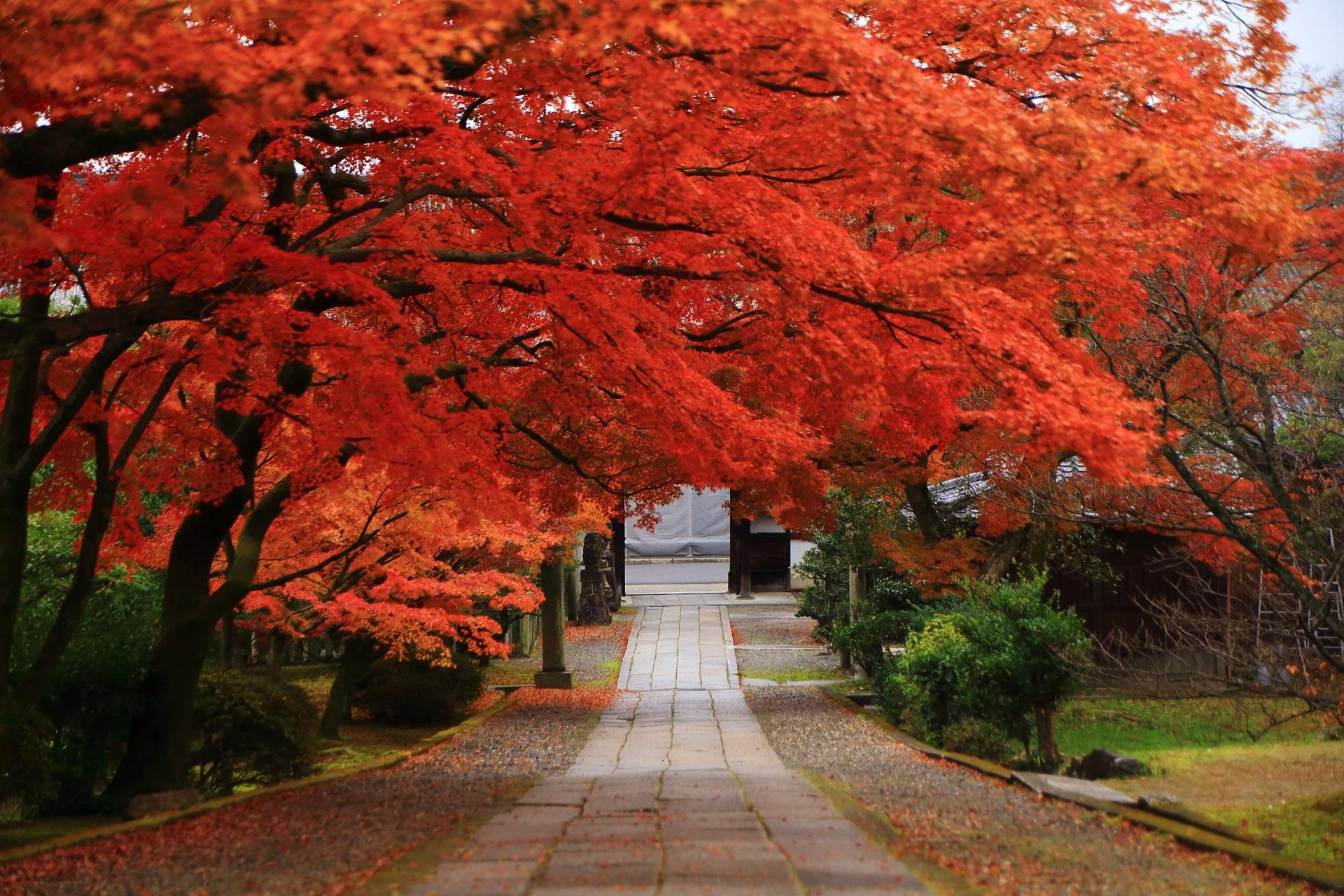 養源院の素晴らしい紅葉と風情ある秋の情景