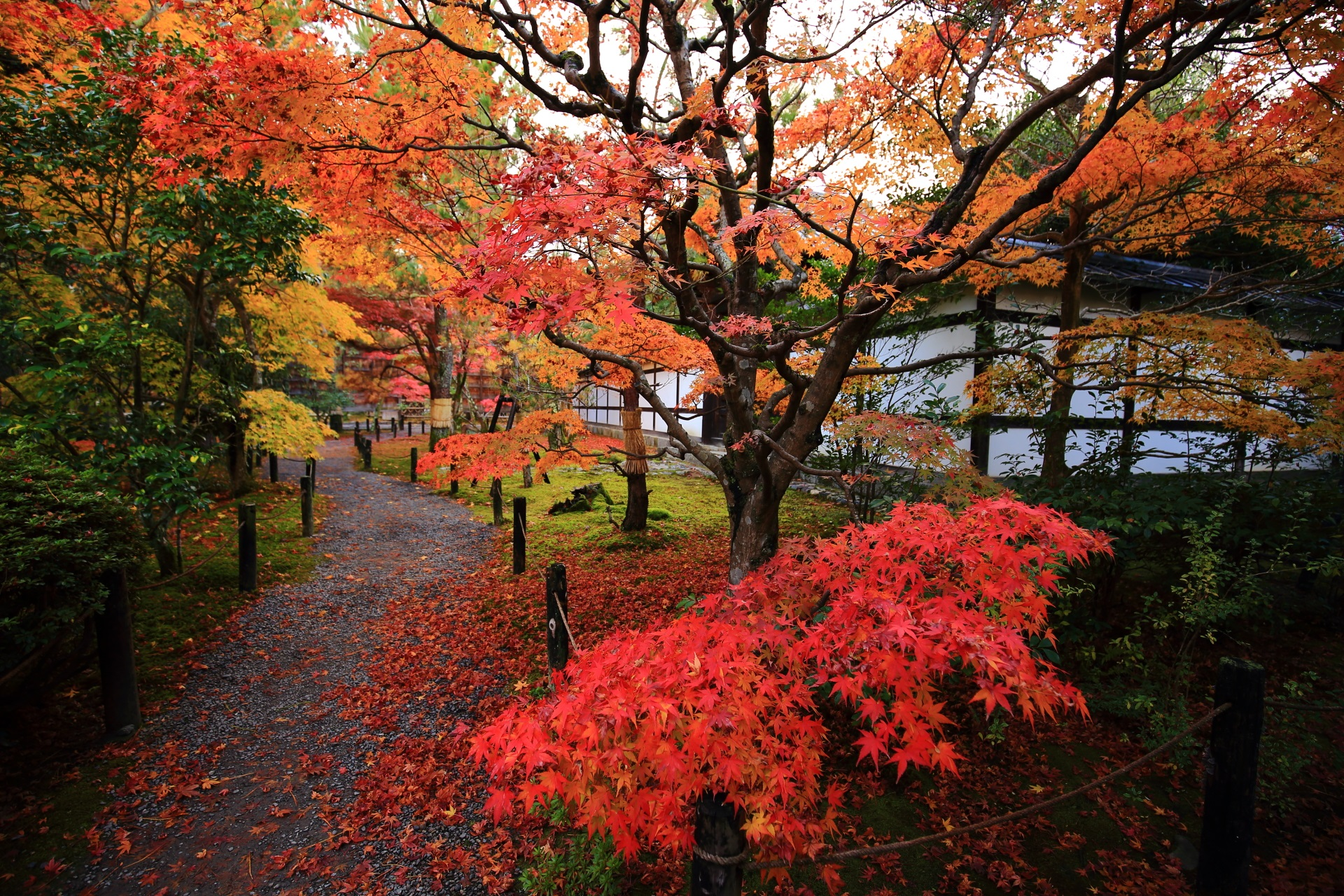 庫裡の色とりどりの見ごろの紅葉