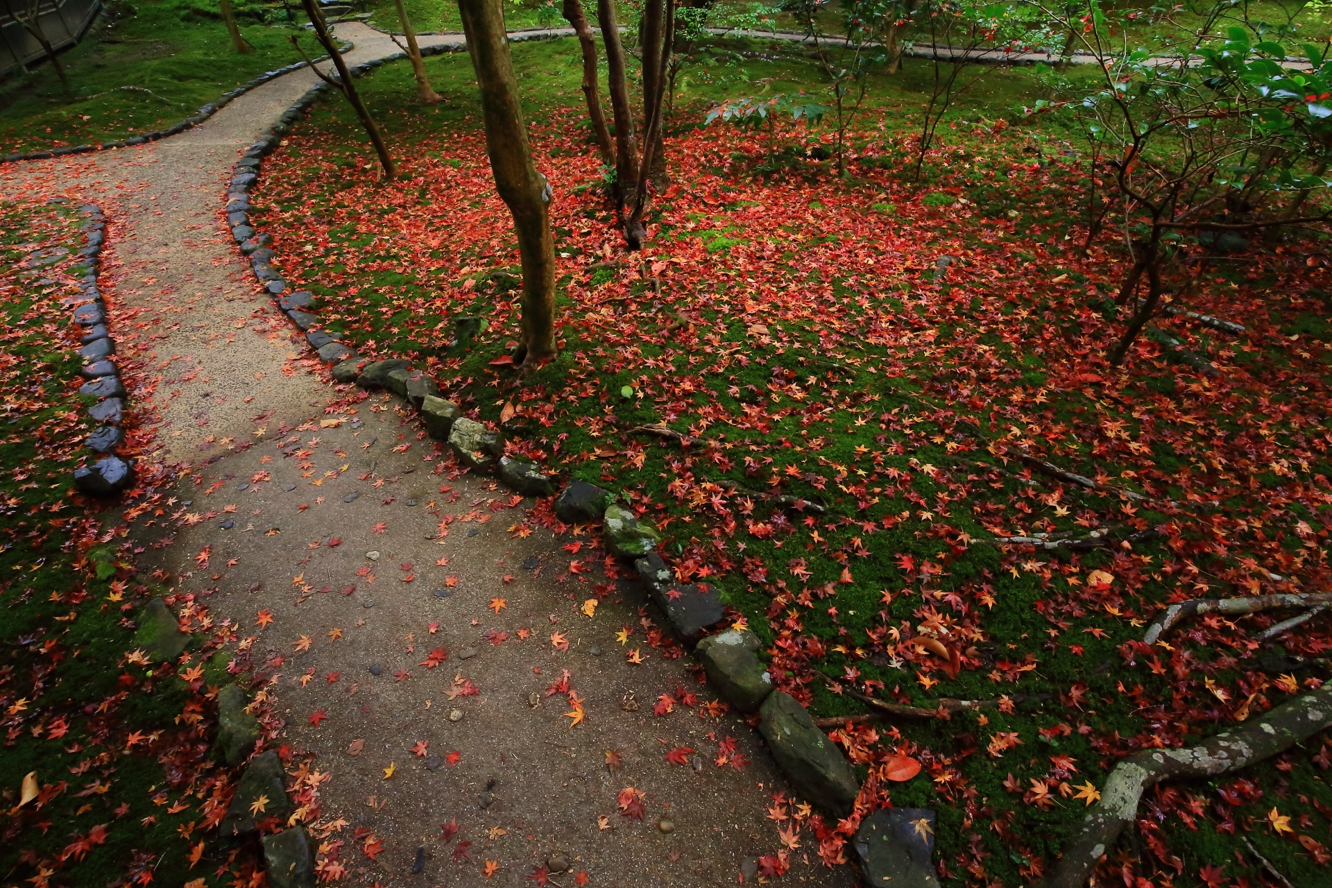 霊鑑寺 散り紅葉 高画質 写真