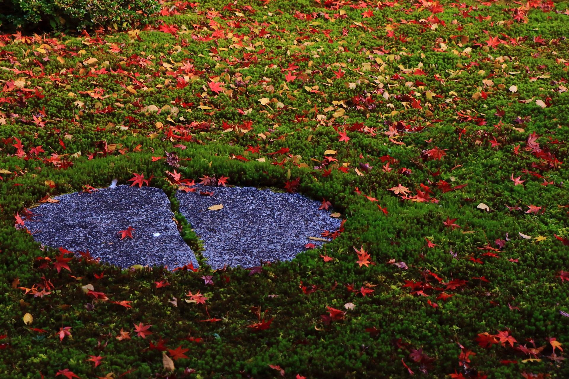 本法寺の緑の苔を染める色とりどりの散りもみじ