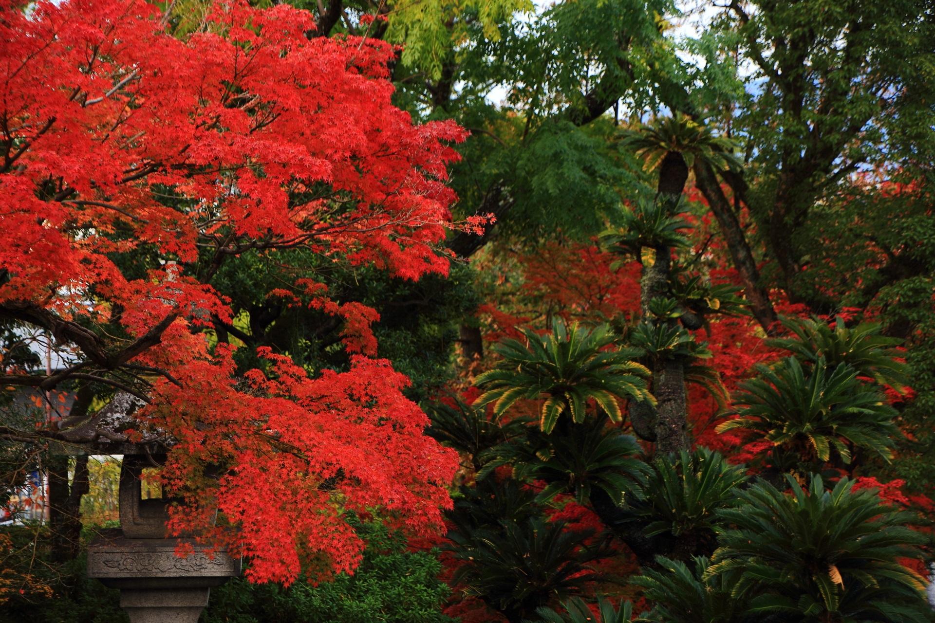 大谷本廟の円通橋と総門の間の紅葉と東南アジアっぽい植物