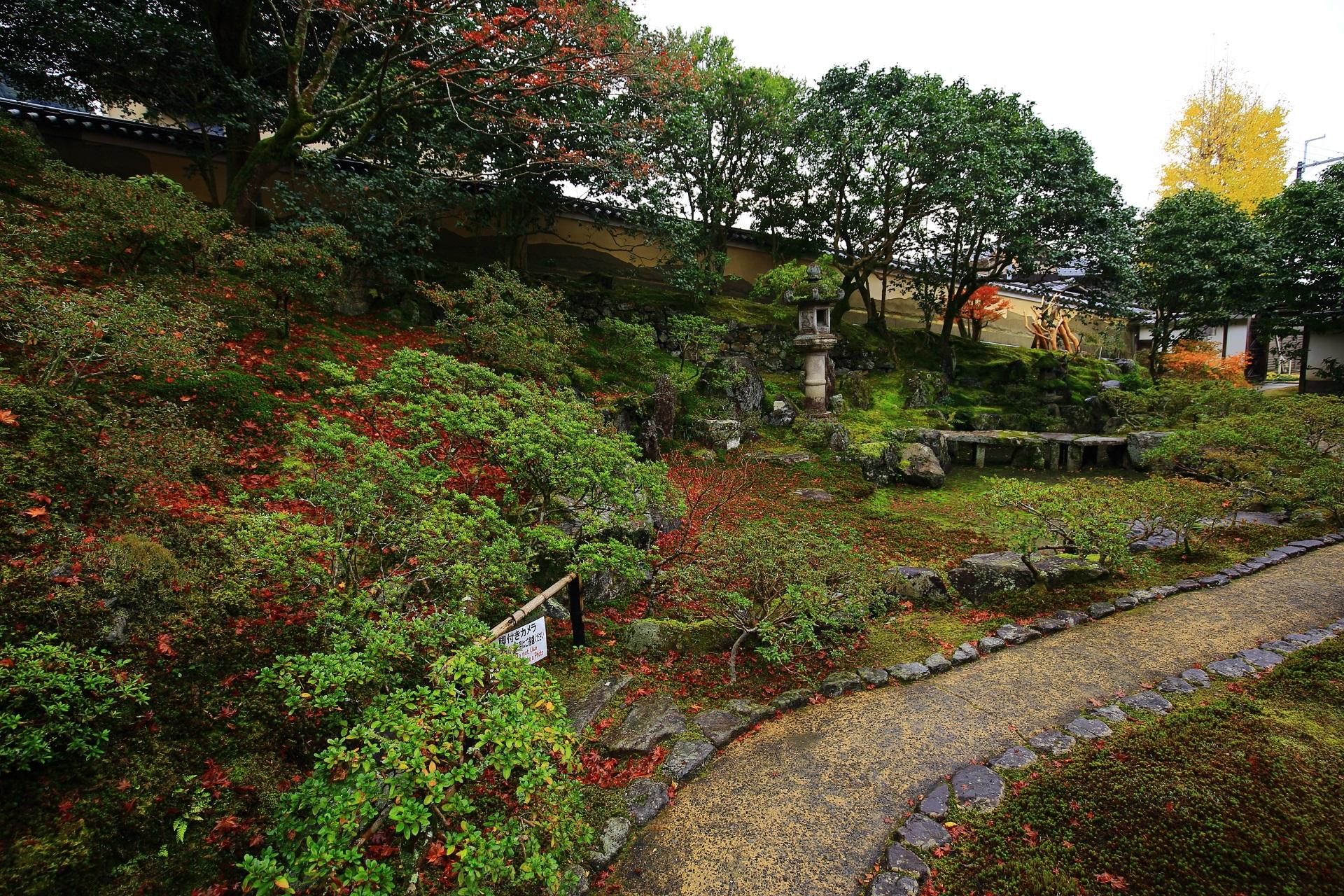 霊鑑寺の多種多様な緑の溢れる庭園と散り紅葉