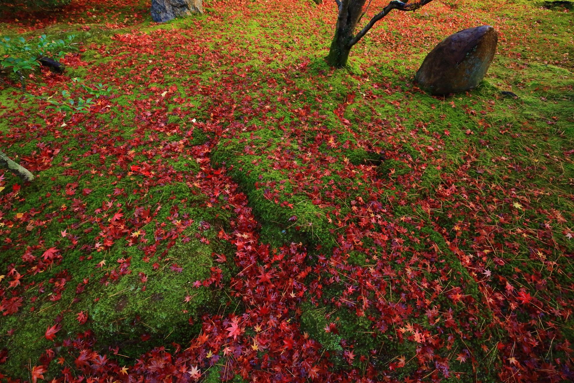 緑の苔を鮮やかに彩る赤い散り紅葉