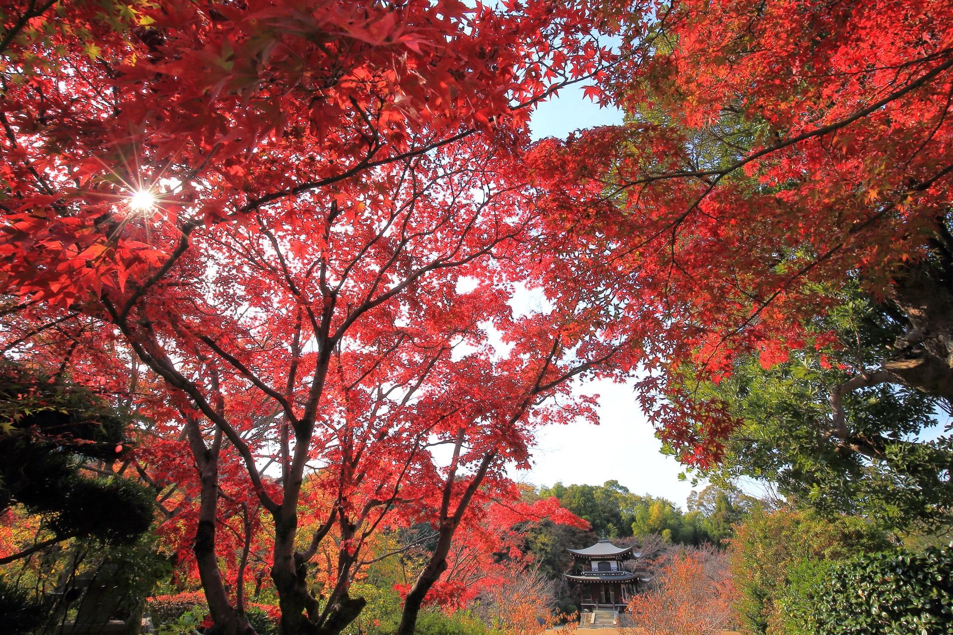 観音堂をつつむ真っ赤な紅葉と太陽