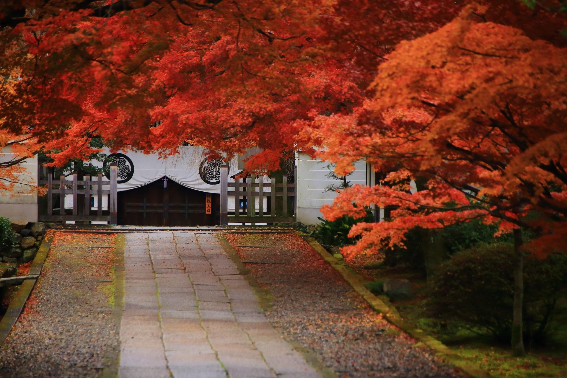 深く色づいた紅葉が華やぐ凛として佇む玄関と風情ある石畳の参道