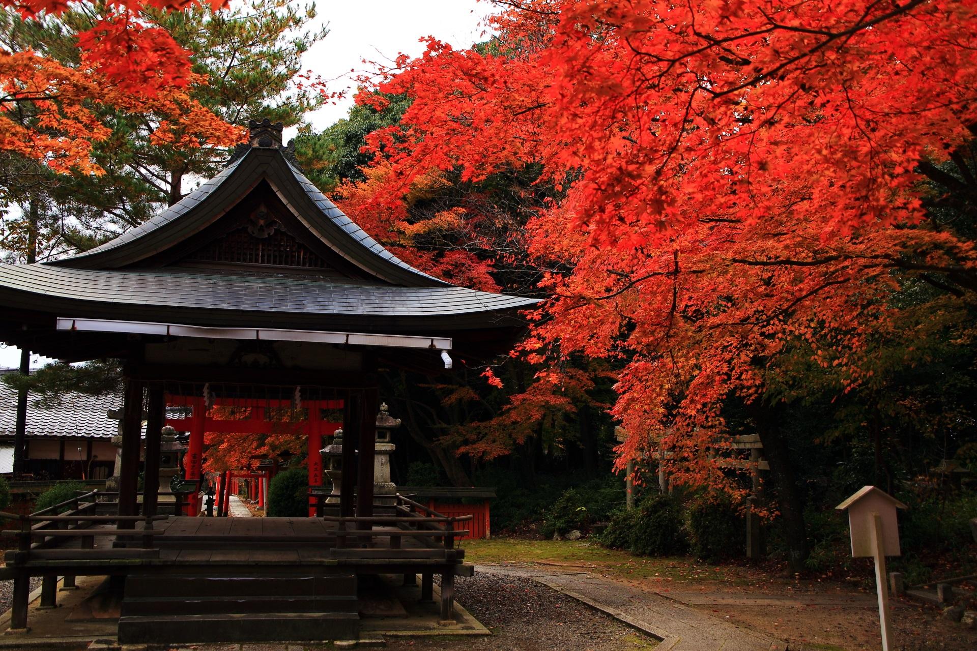 ほのかに光るような見事な色合いの紅葉