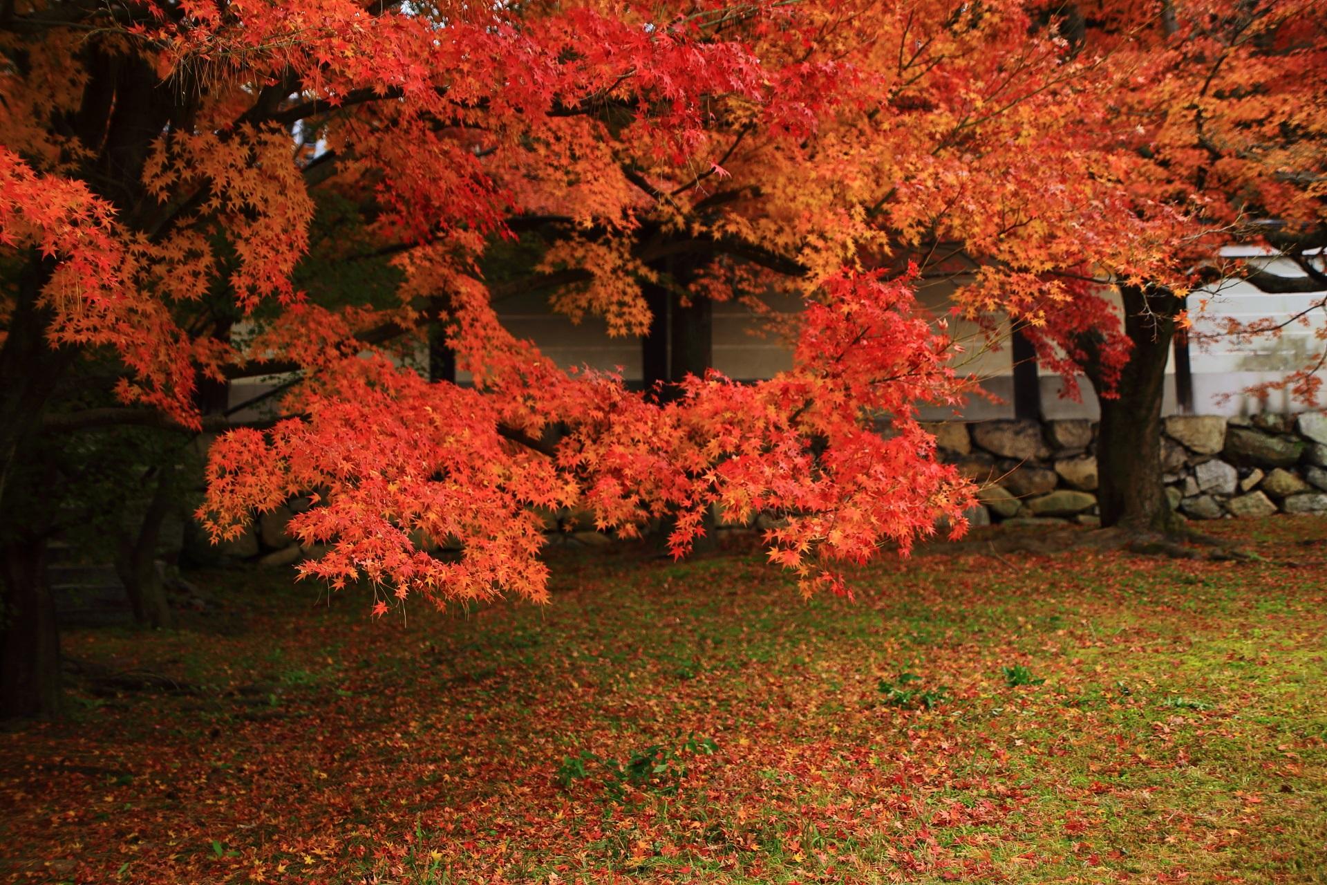 緑の芝生と白壁を染めるオレンジの紅葉
