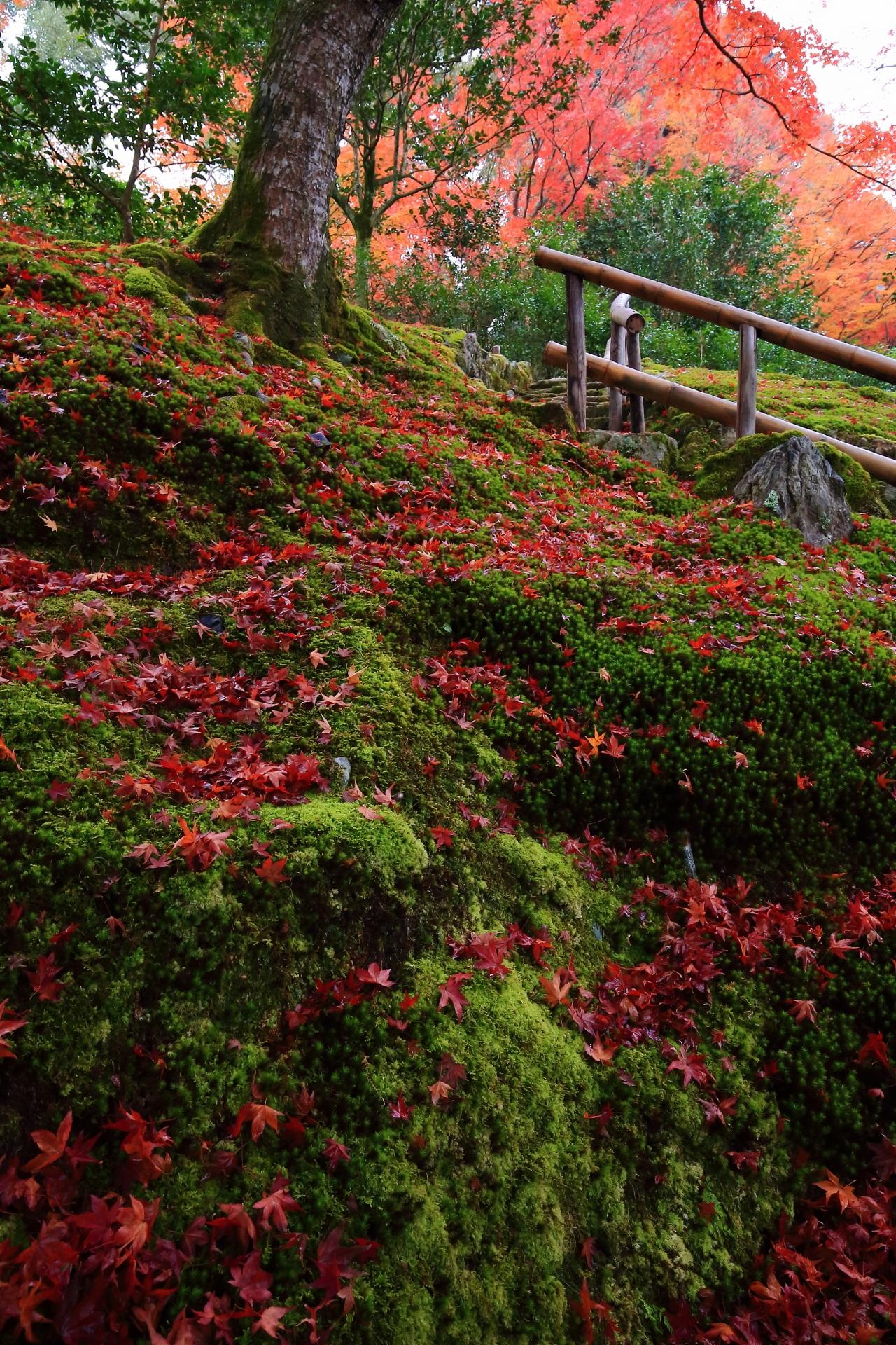 傾斜地一面に育つ苔を彩る見事な散り紅葉