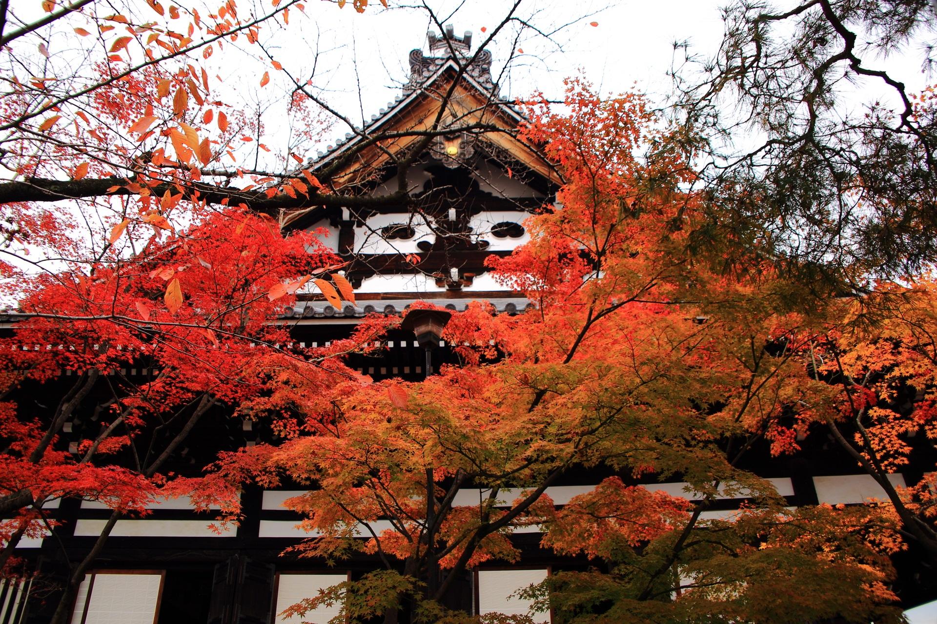 妙顕寺の本堂の白壁に映える鮮やかで多彩な紅葉