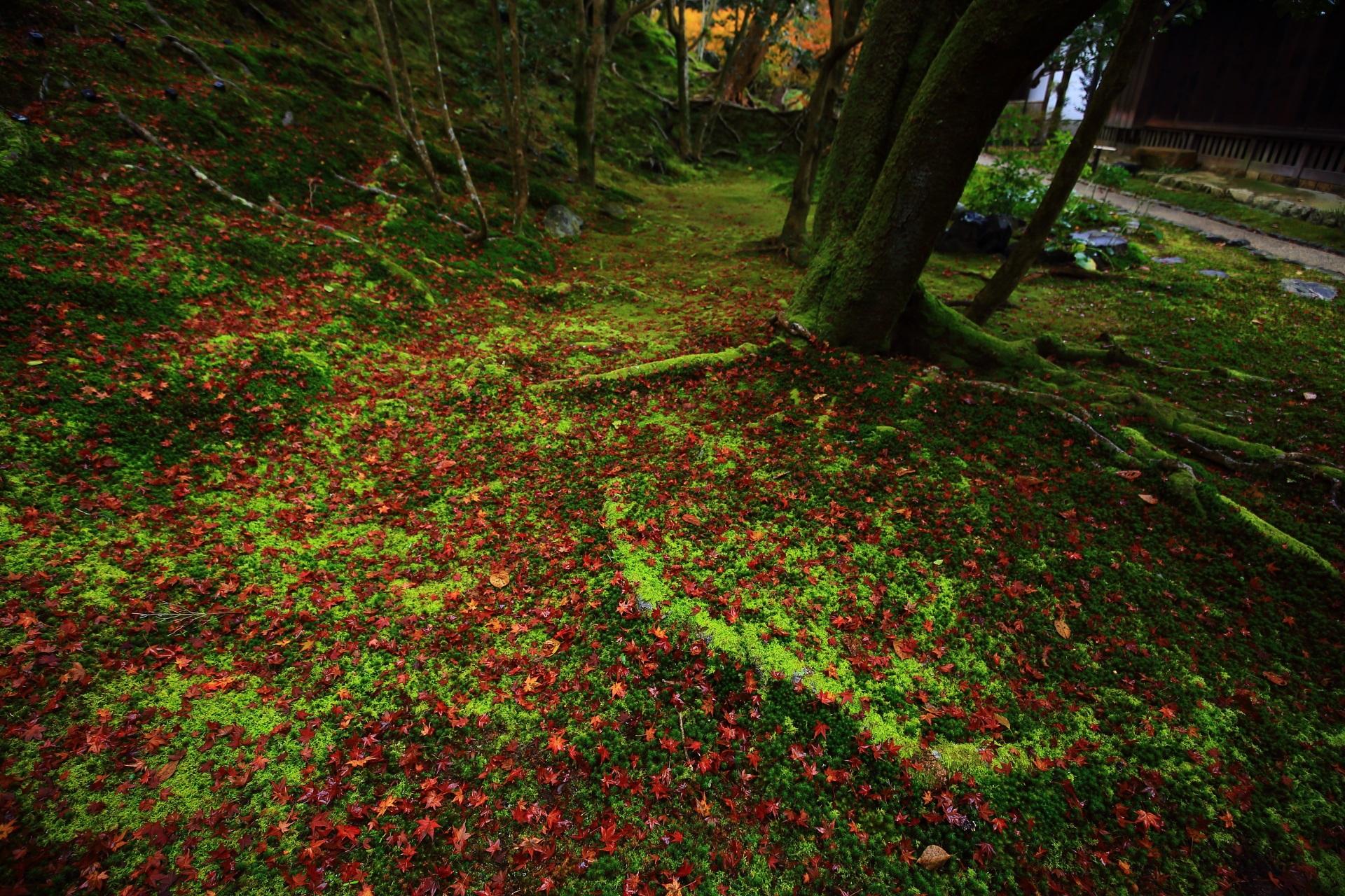 苔の美しさがあってこその美しい散り紅葉