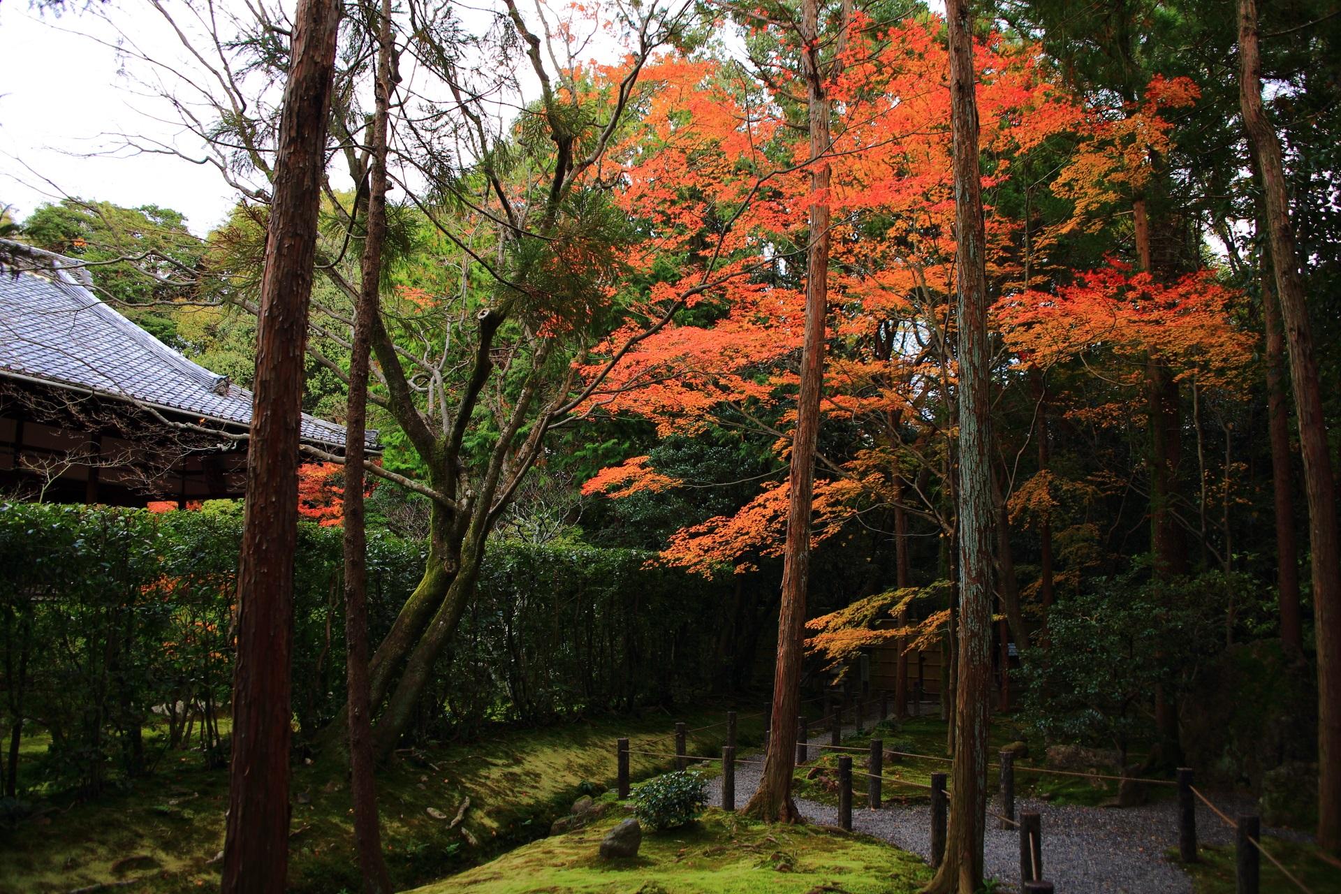 桂春院の「真如の庭」の南側の庭園の紅葉