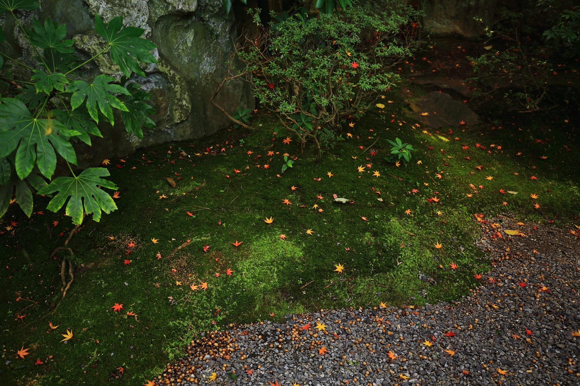 桂春院の綺麗な苔の上の控えめな散り紅葉