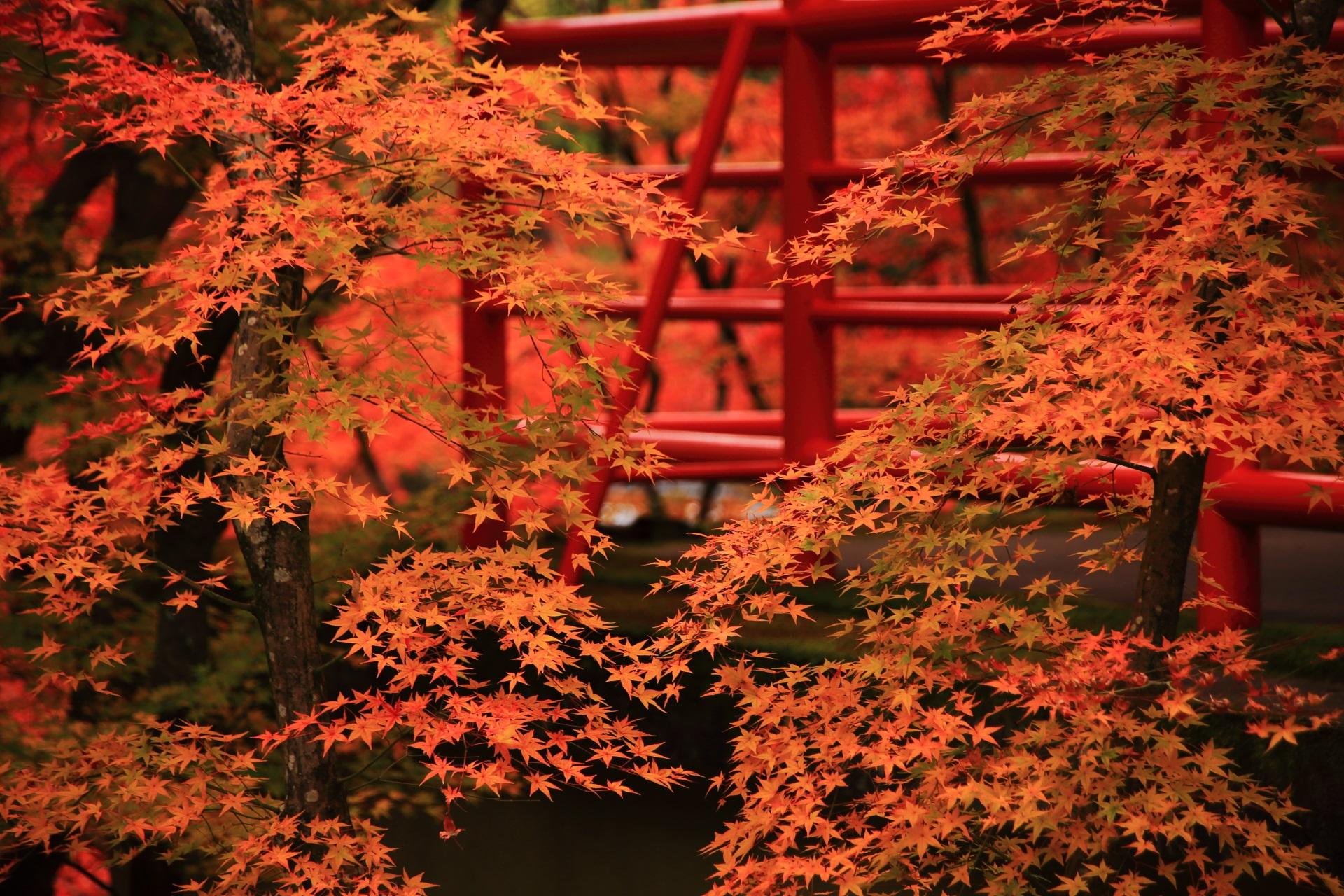 綺麗なオレンジ色の紅葉