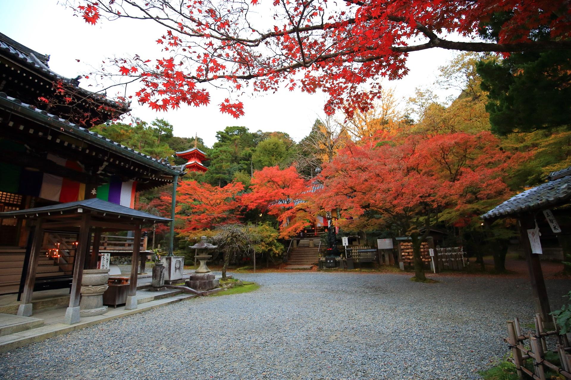 見事な秋色につつまれた今熊野観音寺の境内