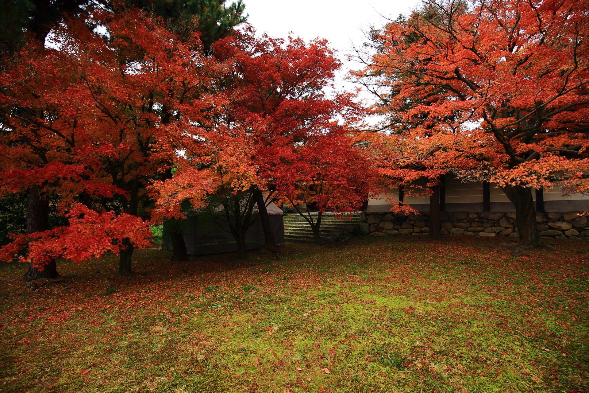 養源院の勅使門前の庭園の雄大な紅葉