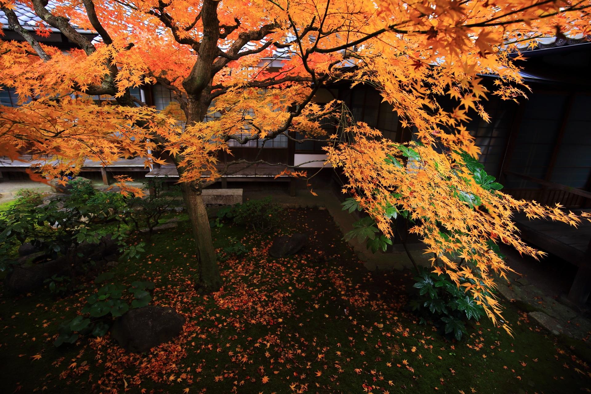 本法寺の苔の上の見事な紅葉と散りもみじ