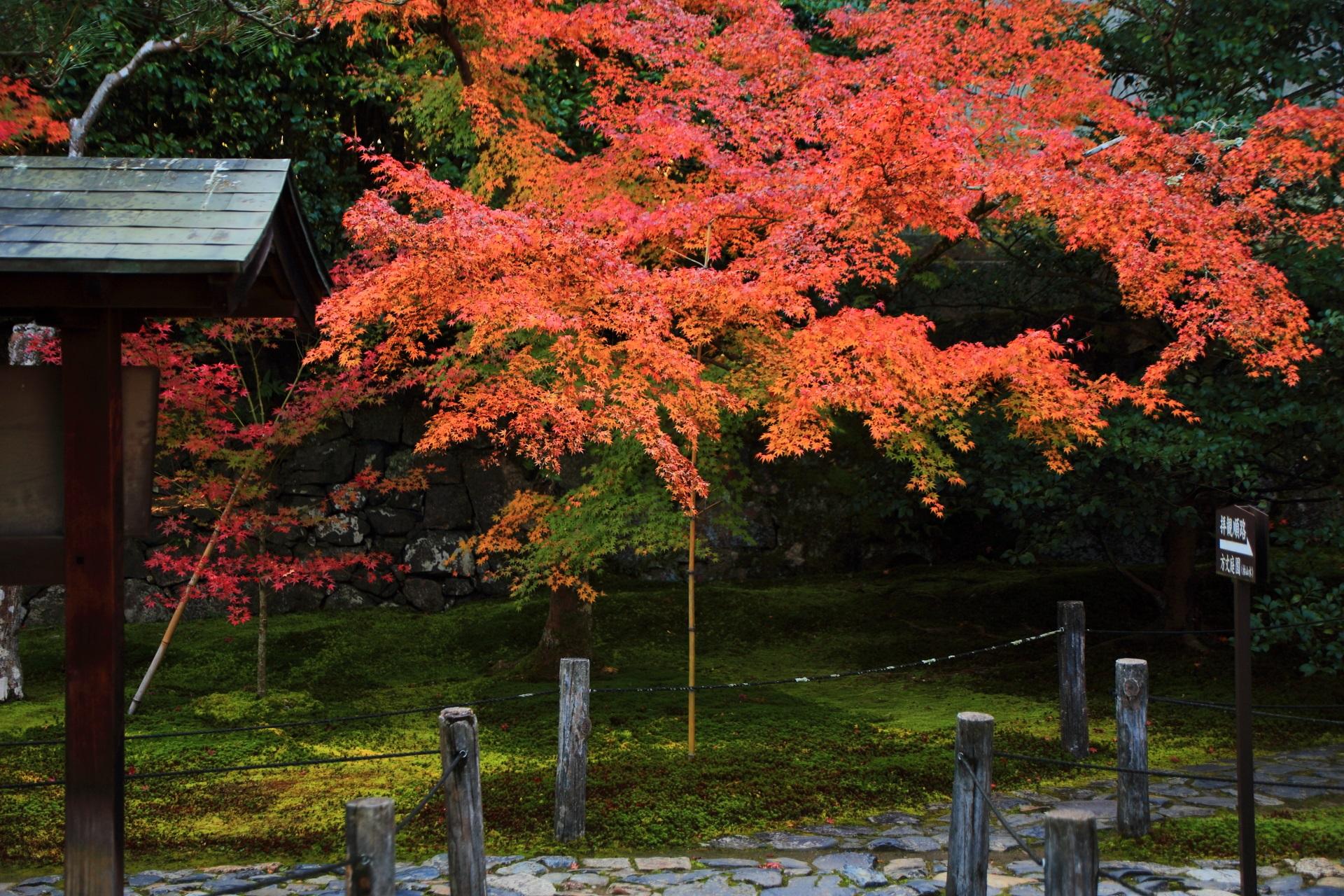 苔を染める鮮やかな紅葉