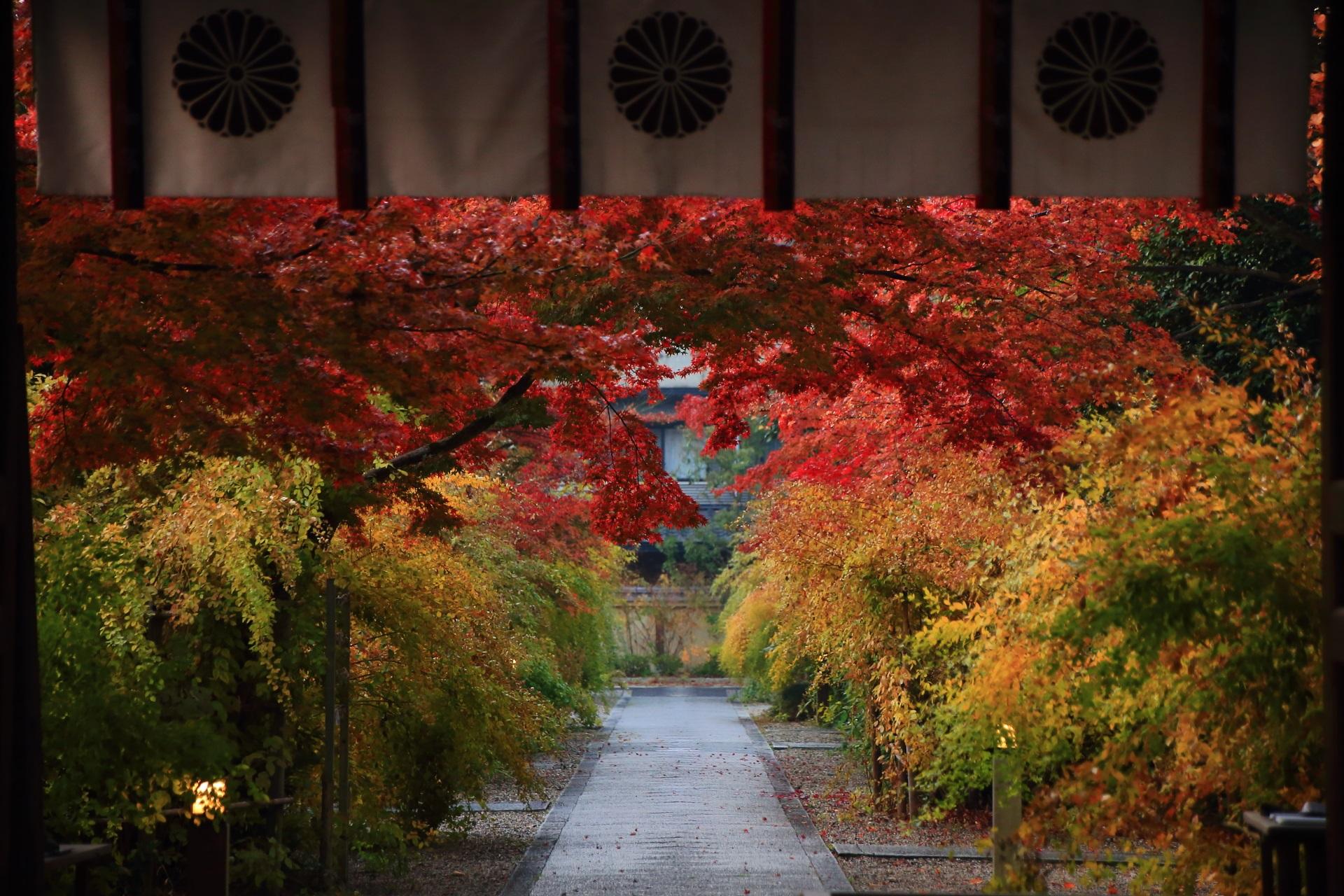 梨木神社の神門の下から眺めた紅葉の参道