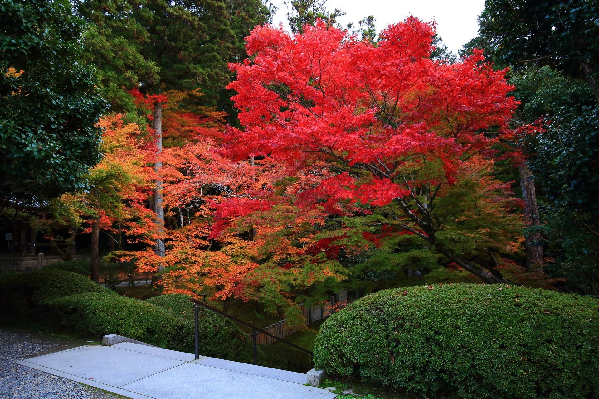 真っ赤に色づく石段の上の紅葉