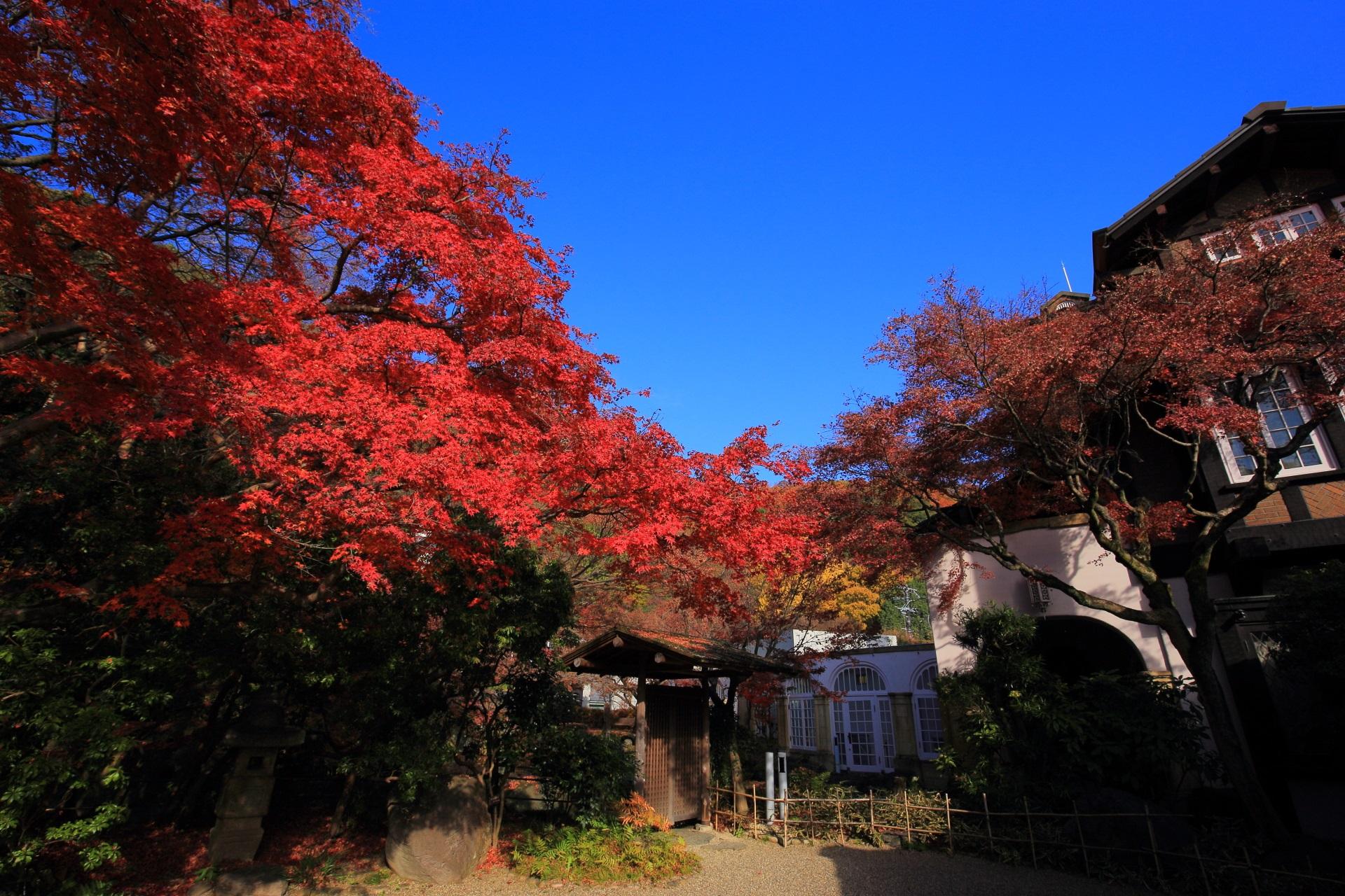 本館の入口付近を彩る鮮やかな紅葉