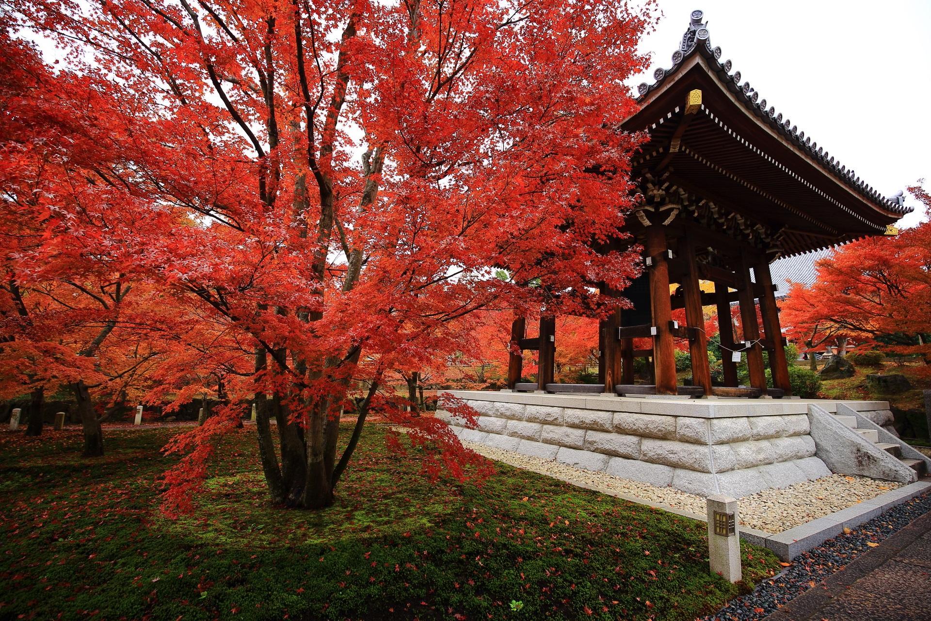 雨で潤う鐘楼と境内を彩る炎のような赤い紅葉