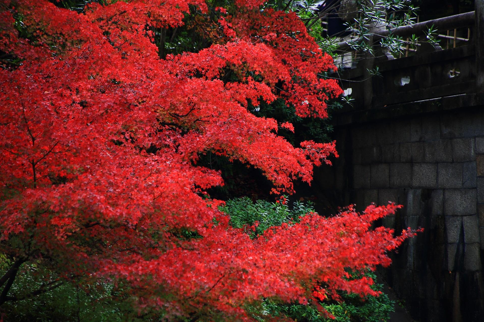大谷本廟の皓月池に架かる円通橋(えんつうきょう)と鮮やかな紅葉