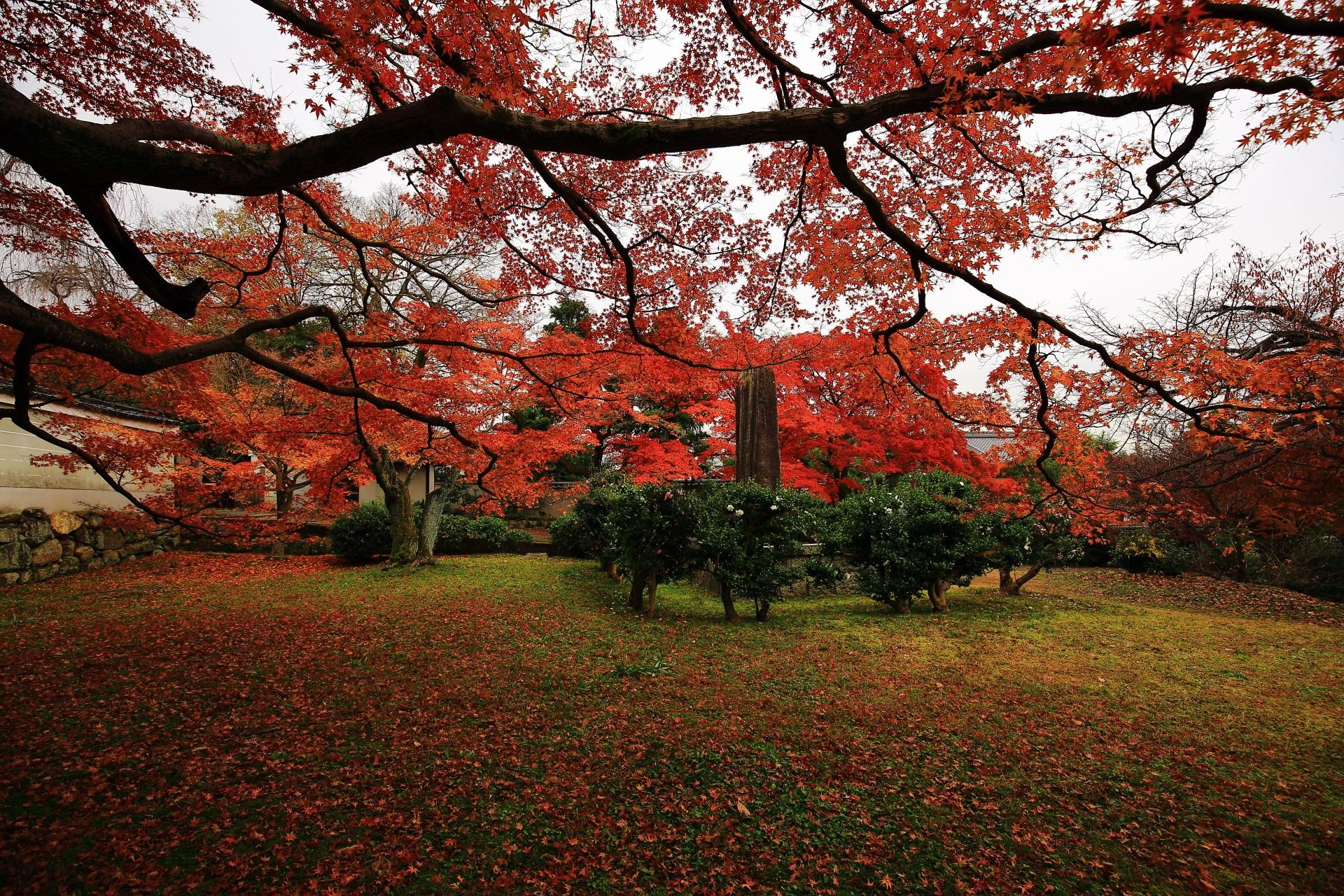 鮮やかな紅葉と散りもみじに染まる庭園と山茶花の木