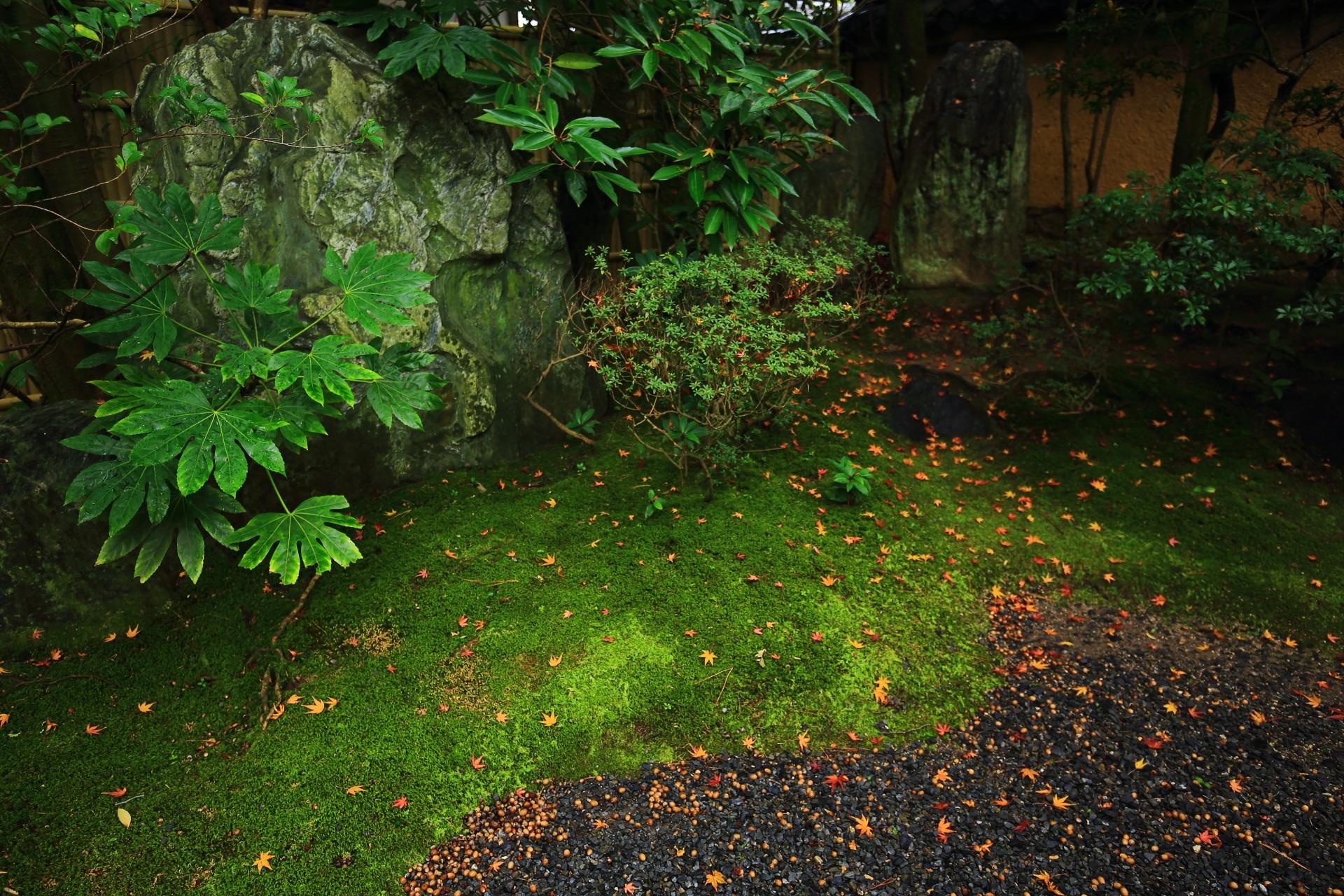 桂春院の苔や多種多様な緑を華やぐ散りもみじ