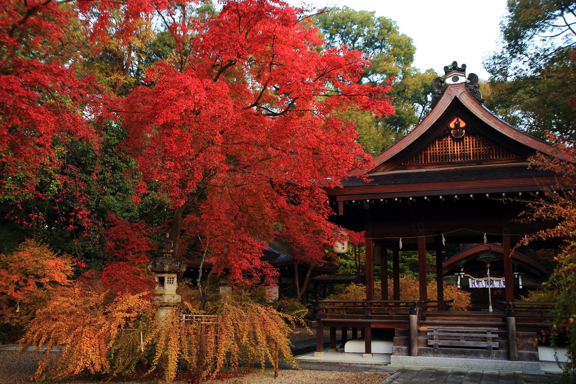 梨木神社の拝殿を彩る鮮やかな紅葉と淡い萩