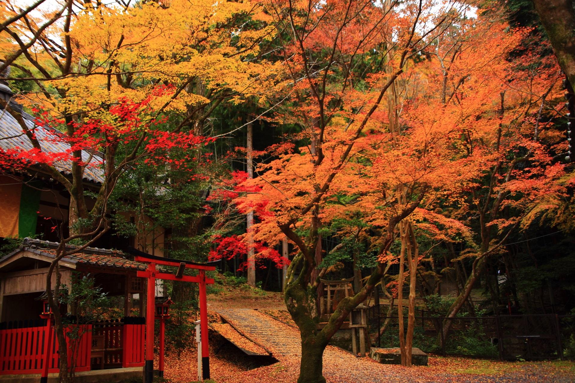 熊野権現社と美しく鮮やかな紅葉