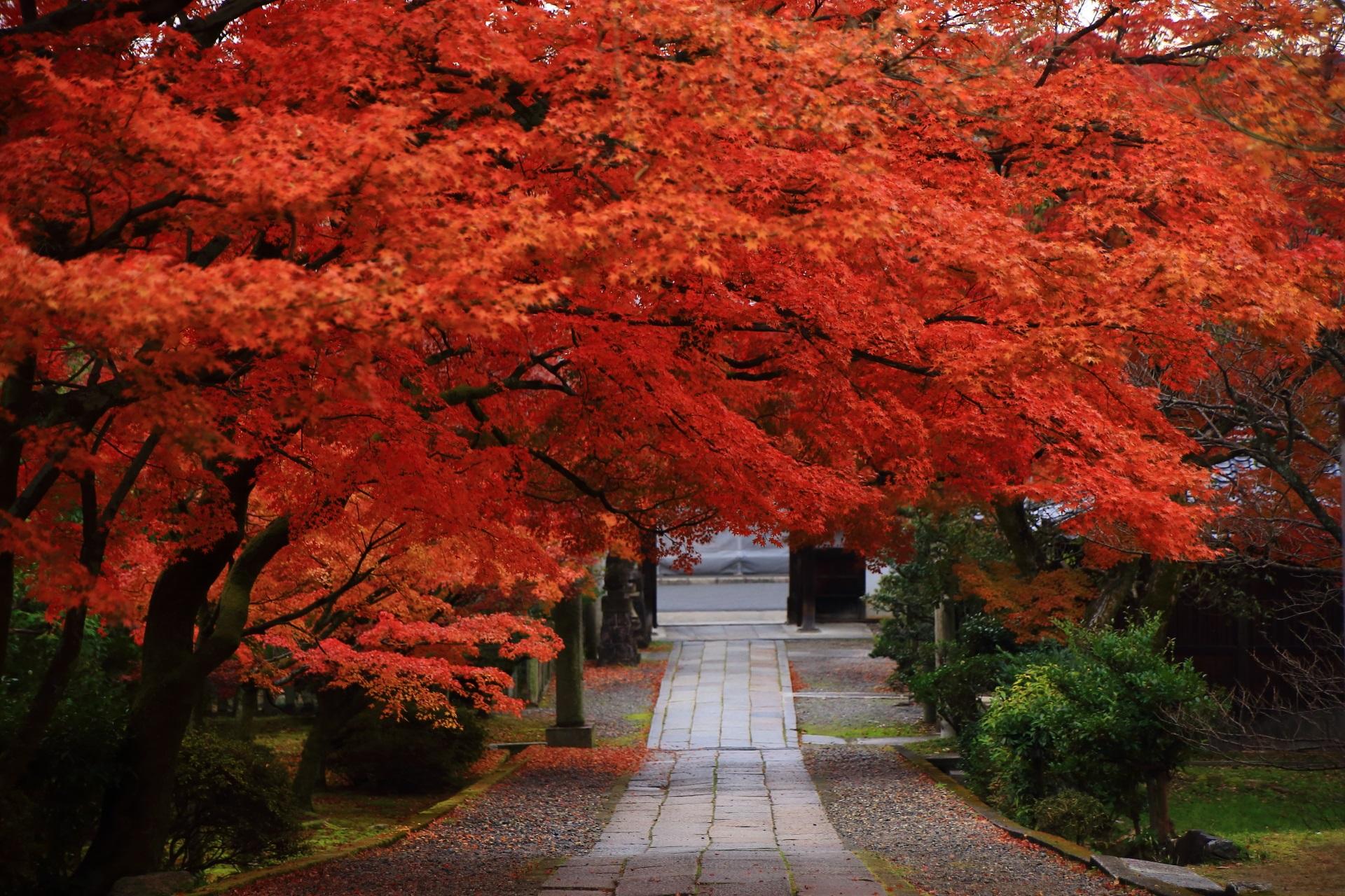 養源院の参道の溢れ出す紅葉