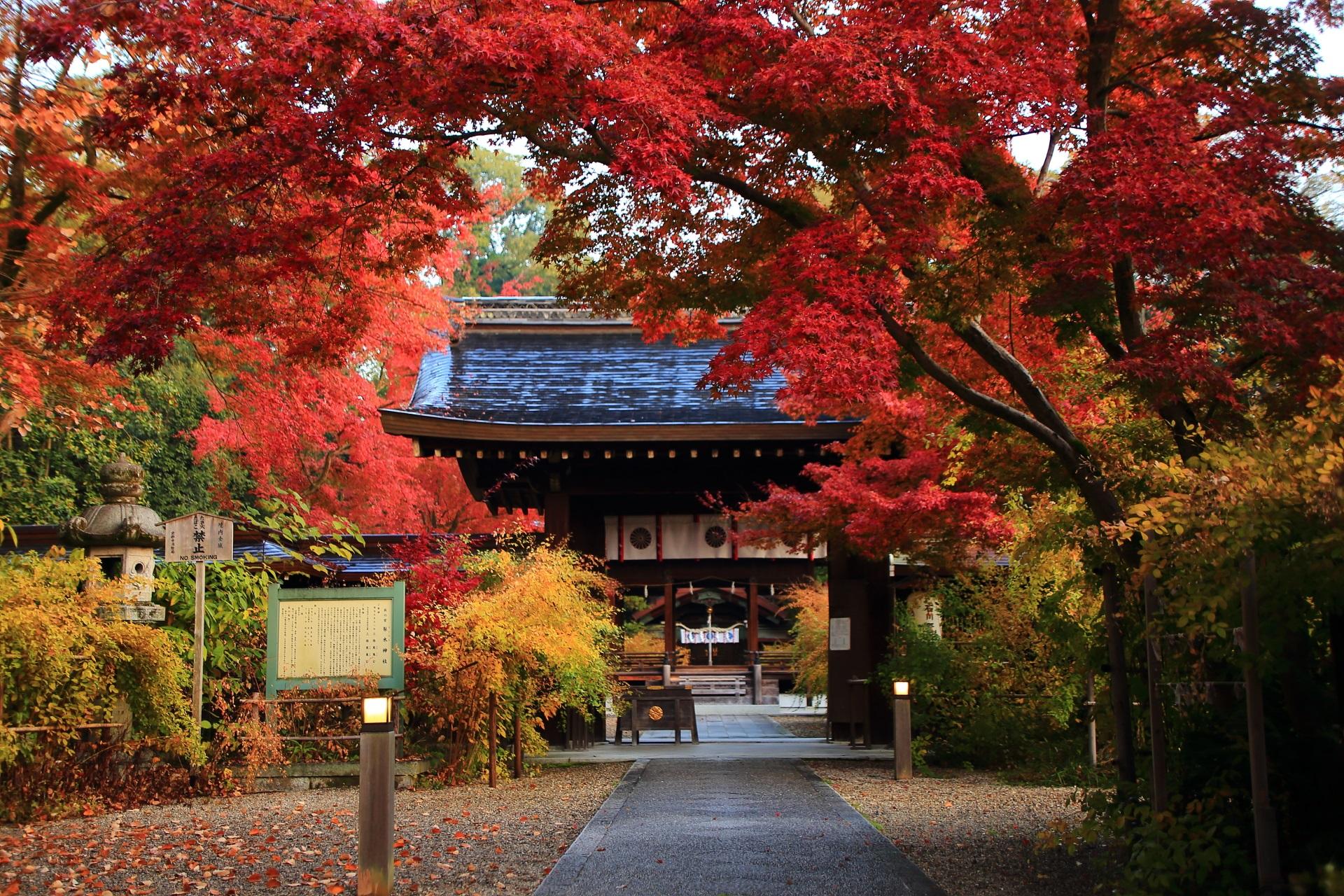 燃えるような真っ赤な紅葉と淡く色づいた萩につつまれる神門